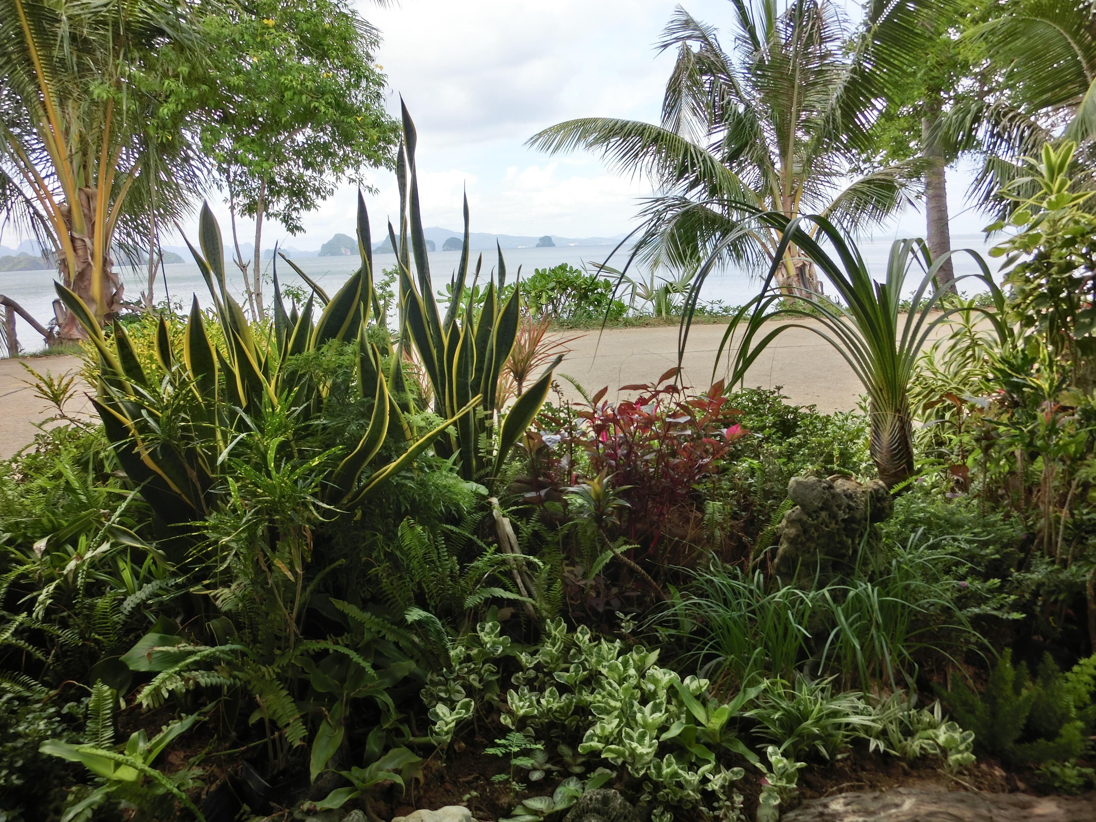 Strand Meer Pflanze Blume Dschungel Asien Botanik Garten Flora Ve ation Regenwald Plantage Botanischer Garten Tropen –kosystem