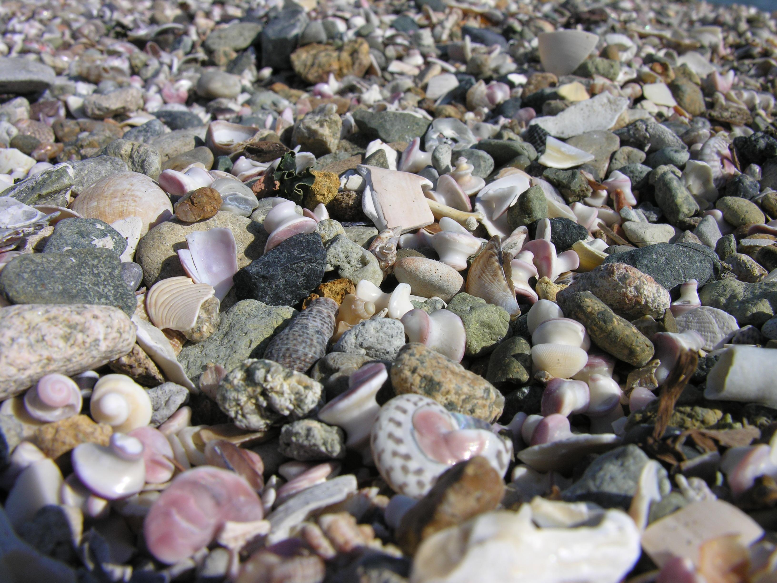 Gratis afbeeldingen strand zee rots bloem eten kiezelsteen