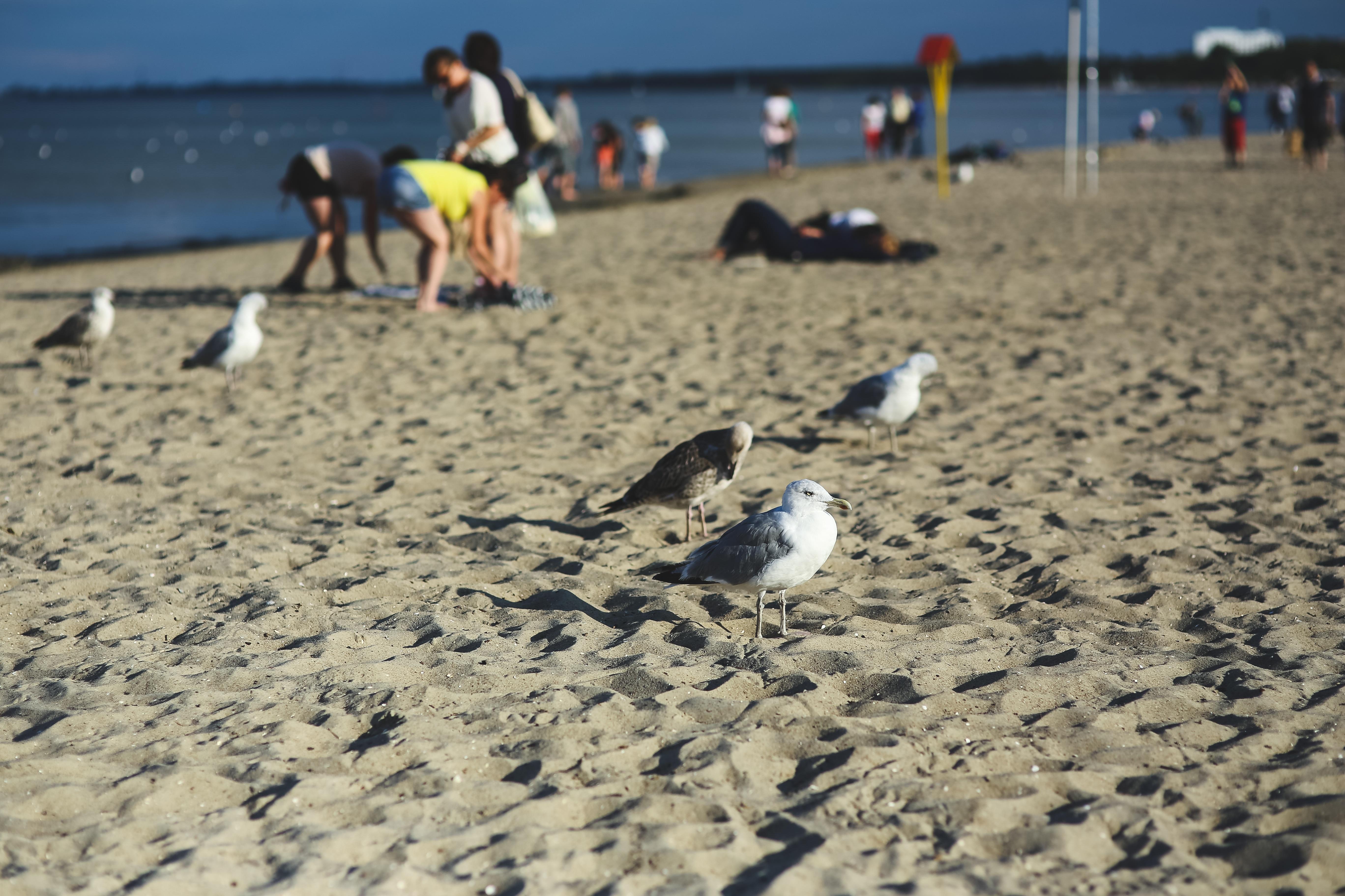 Photos of seagulls on the beach