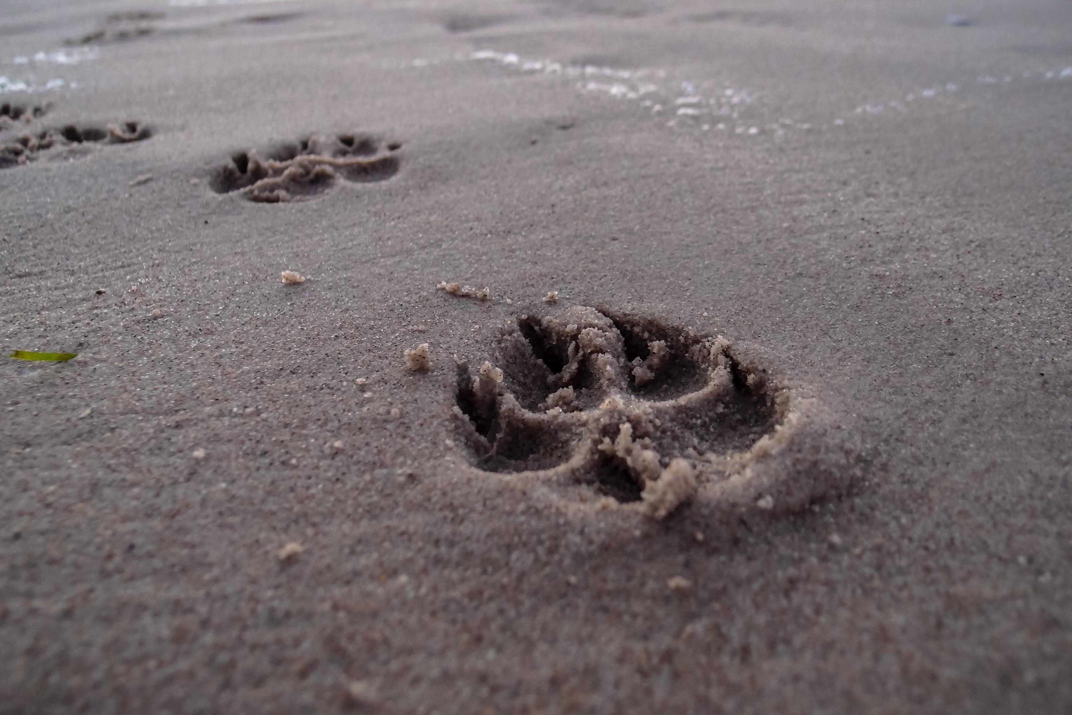 Следы животных на песке фото