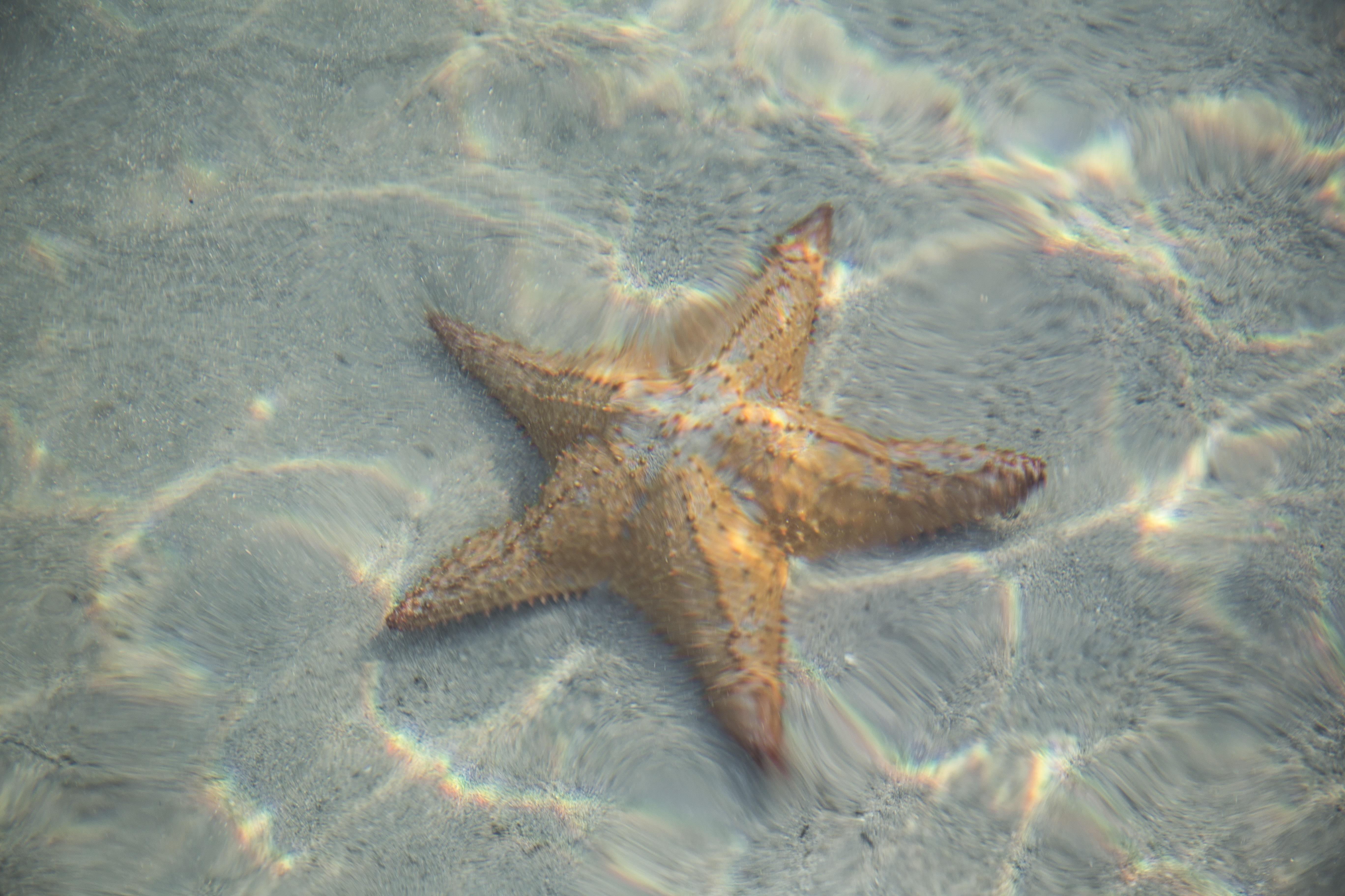 Images Gratuites : plage, le sable, océan, animal, été