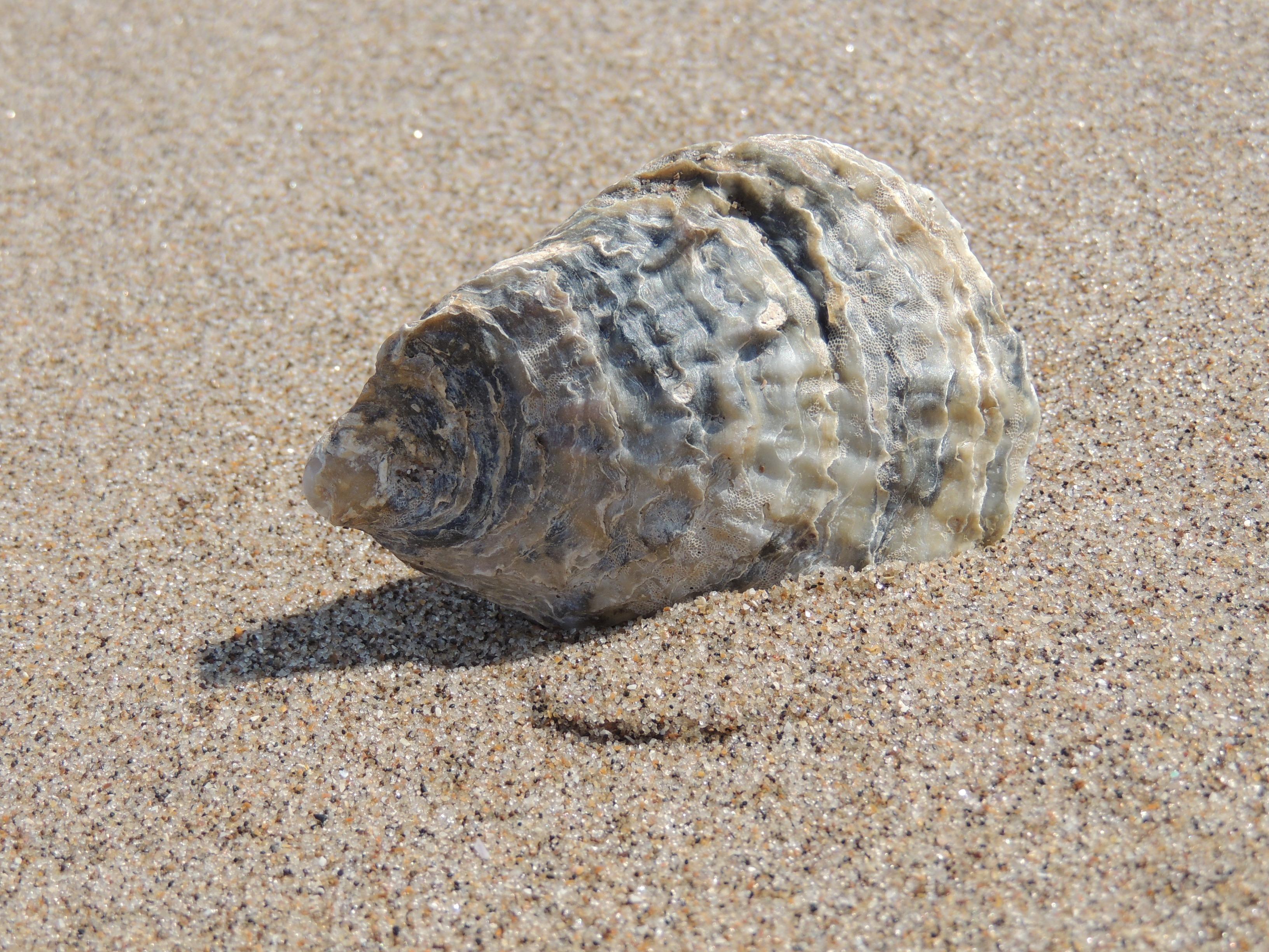 Gambar Pantai Pasir Lautan Liburan Kerang Kerangan Fauna
