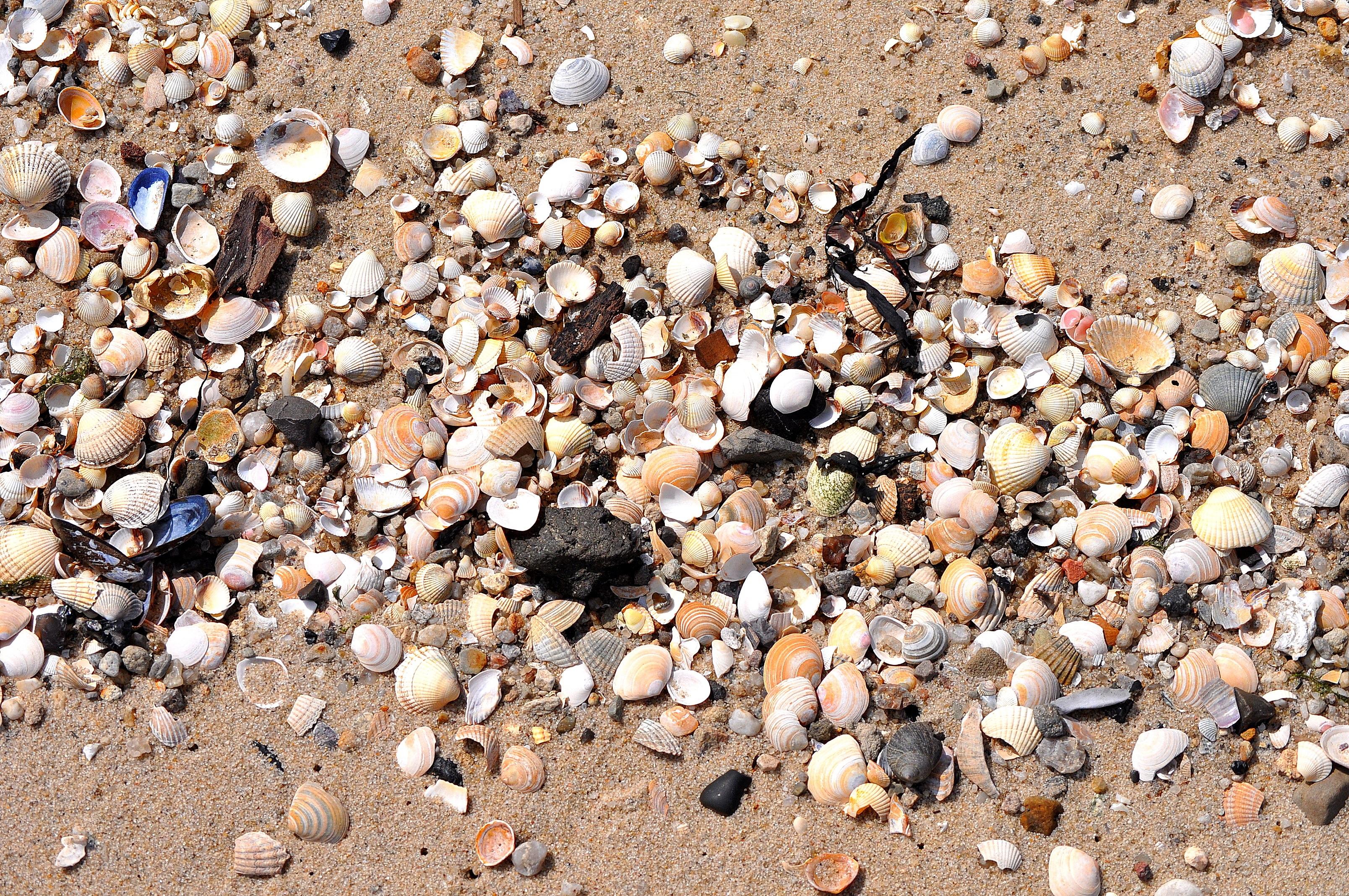 Gambar Pantai Pasir Batu Kerikil Tanah Bahan Kerang Laut
