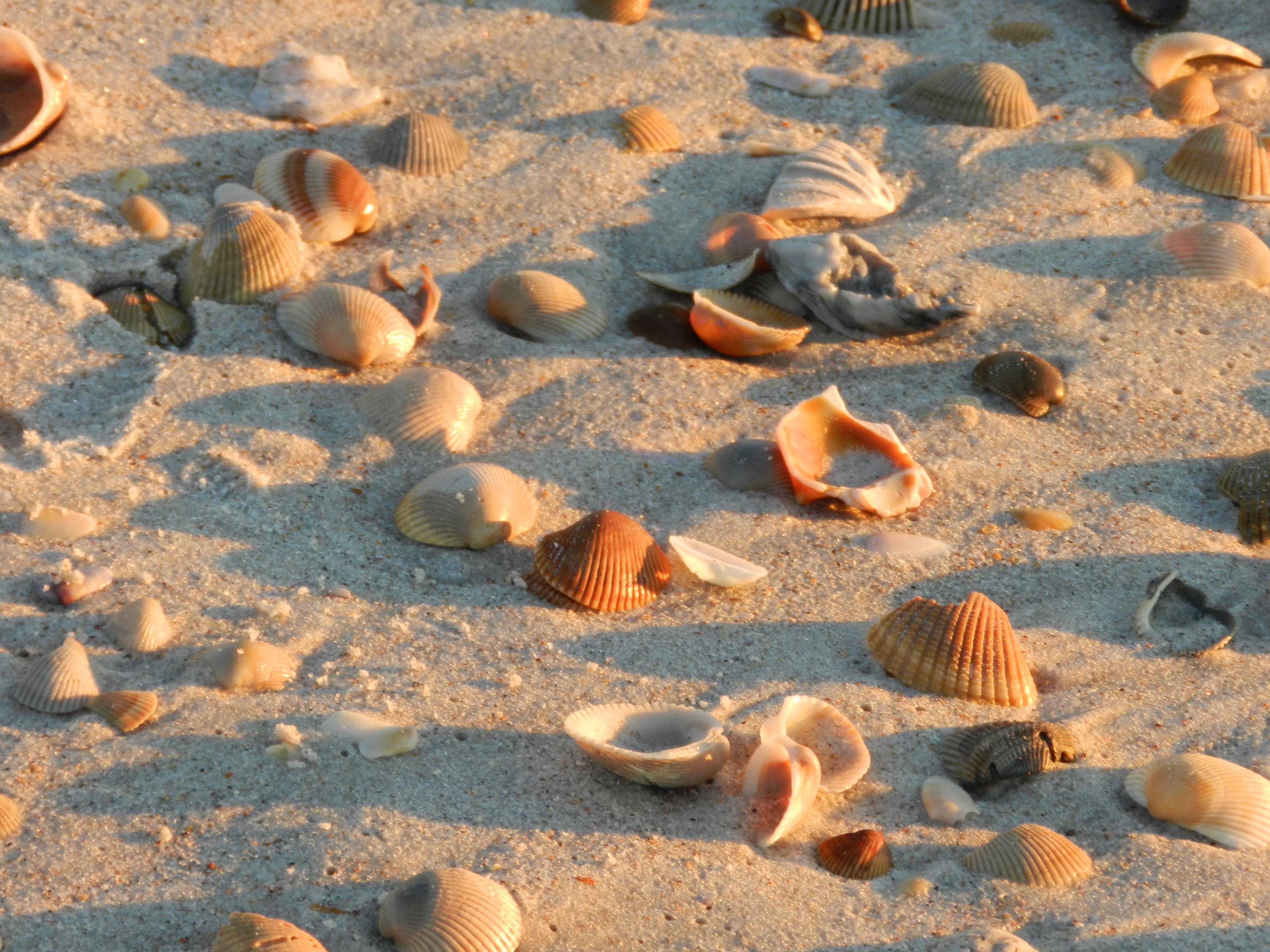 желаю картинки из ракушек на песке короткие пожелания днем