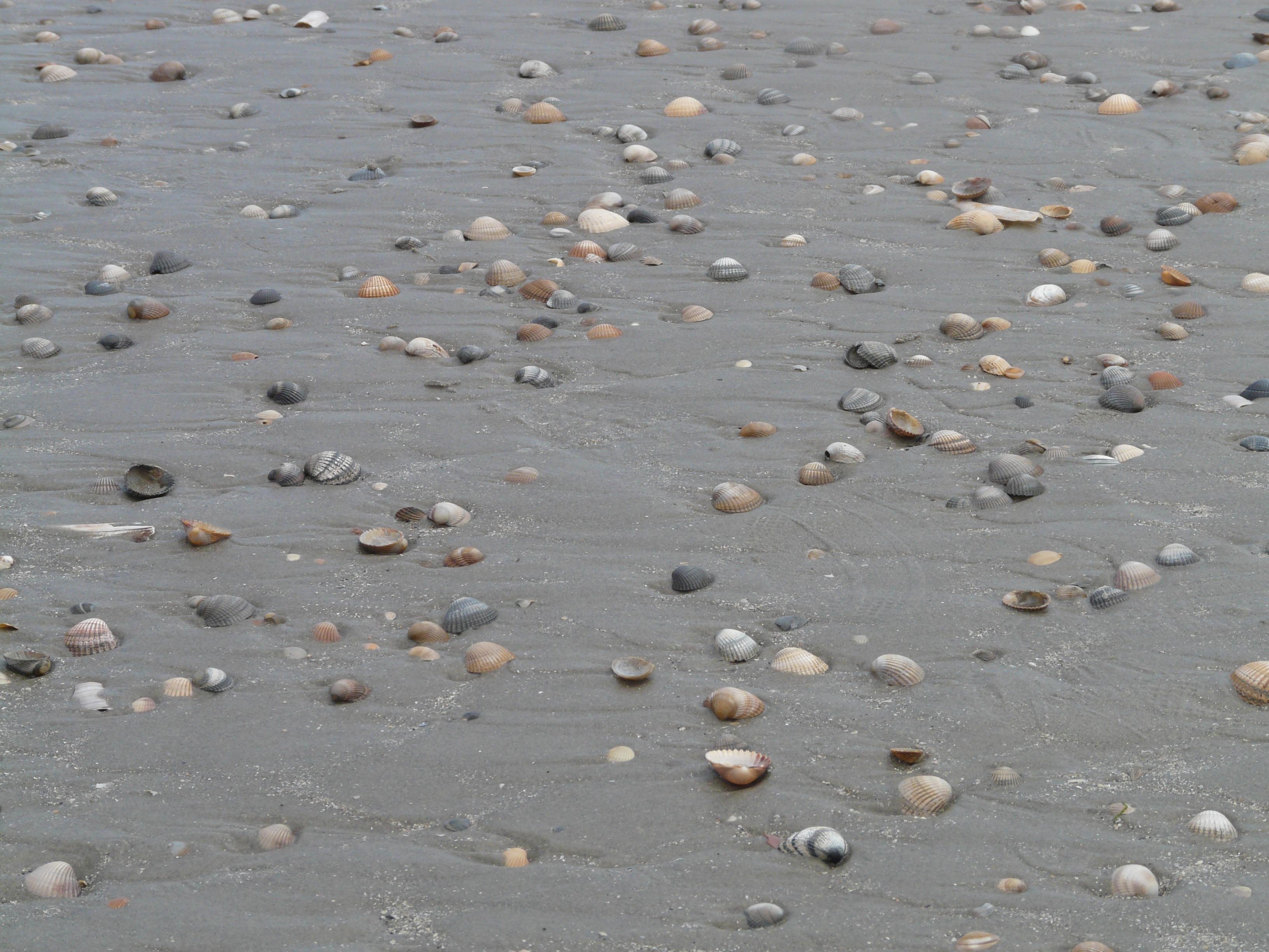 Gratis afbeeldingen strand zee zand rots zonlicht reflectie