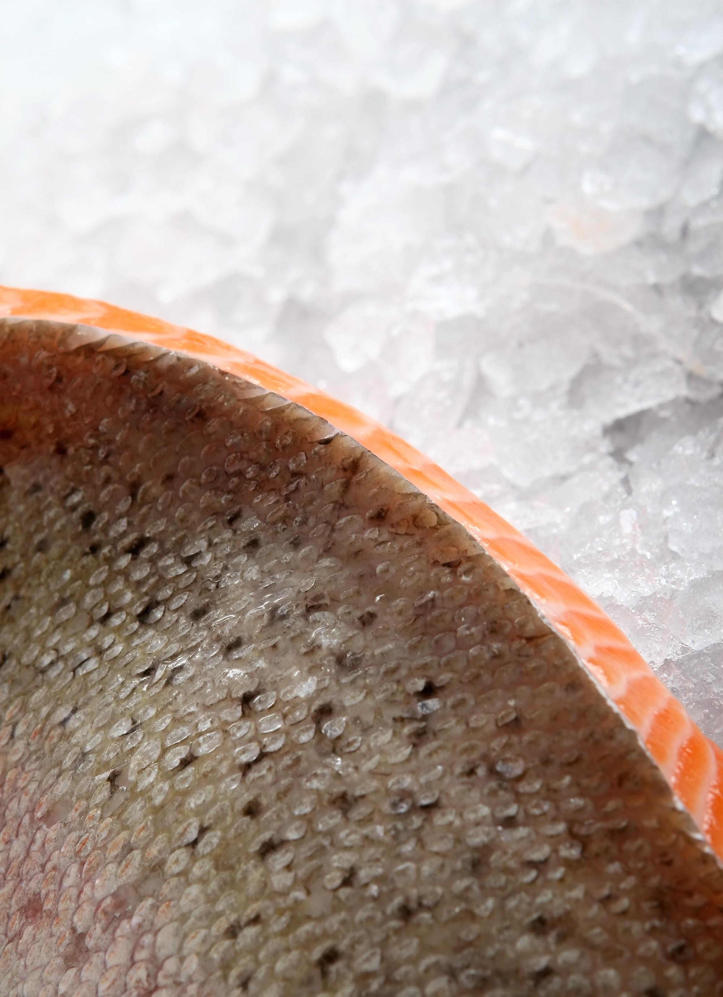 80 Gambar Abstrak Roti HD