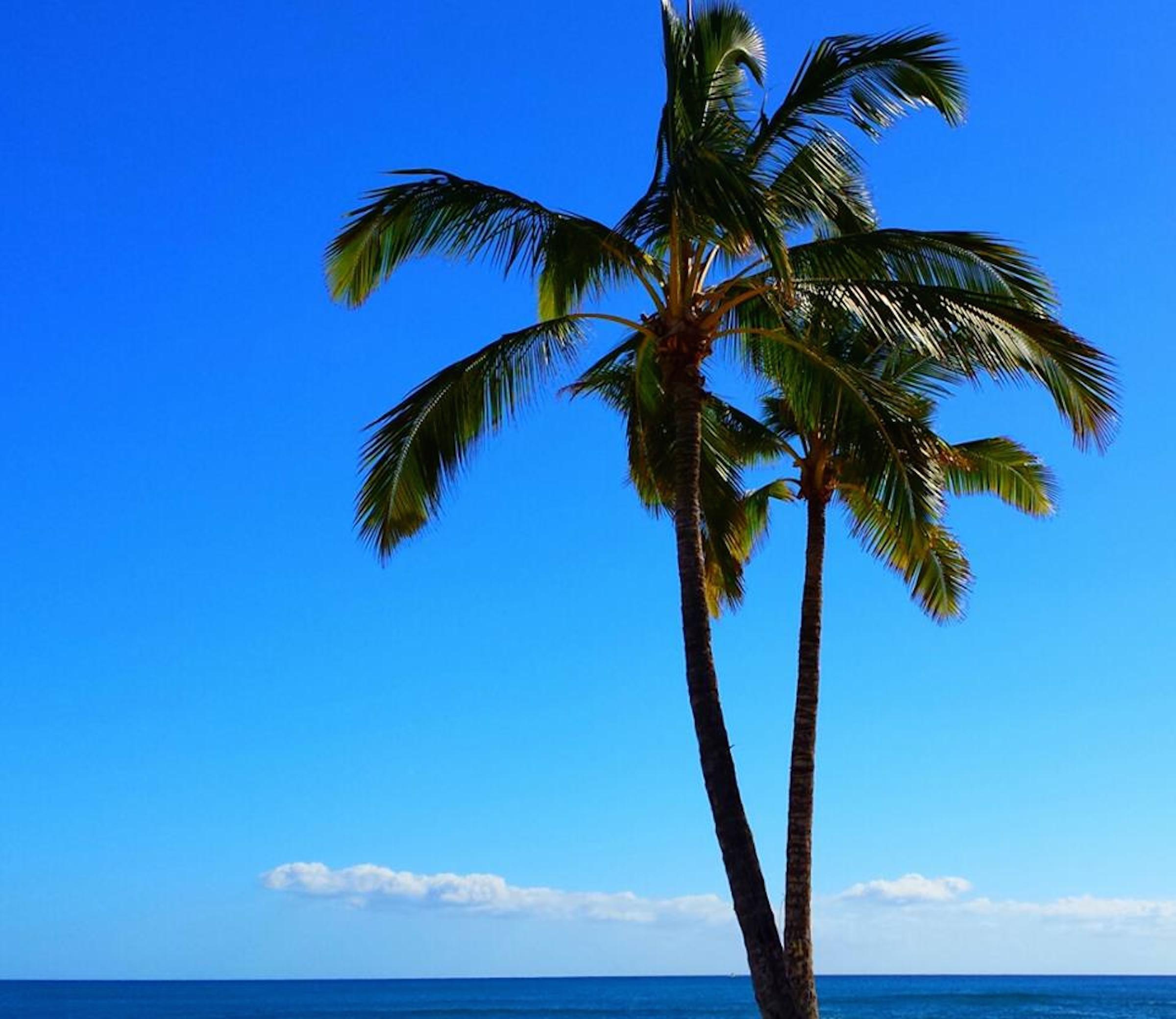 пальмы картинки больших размеров случая