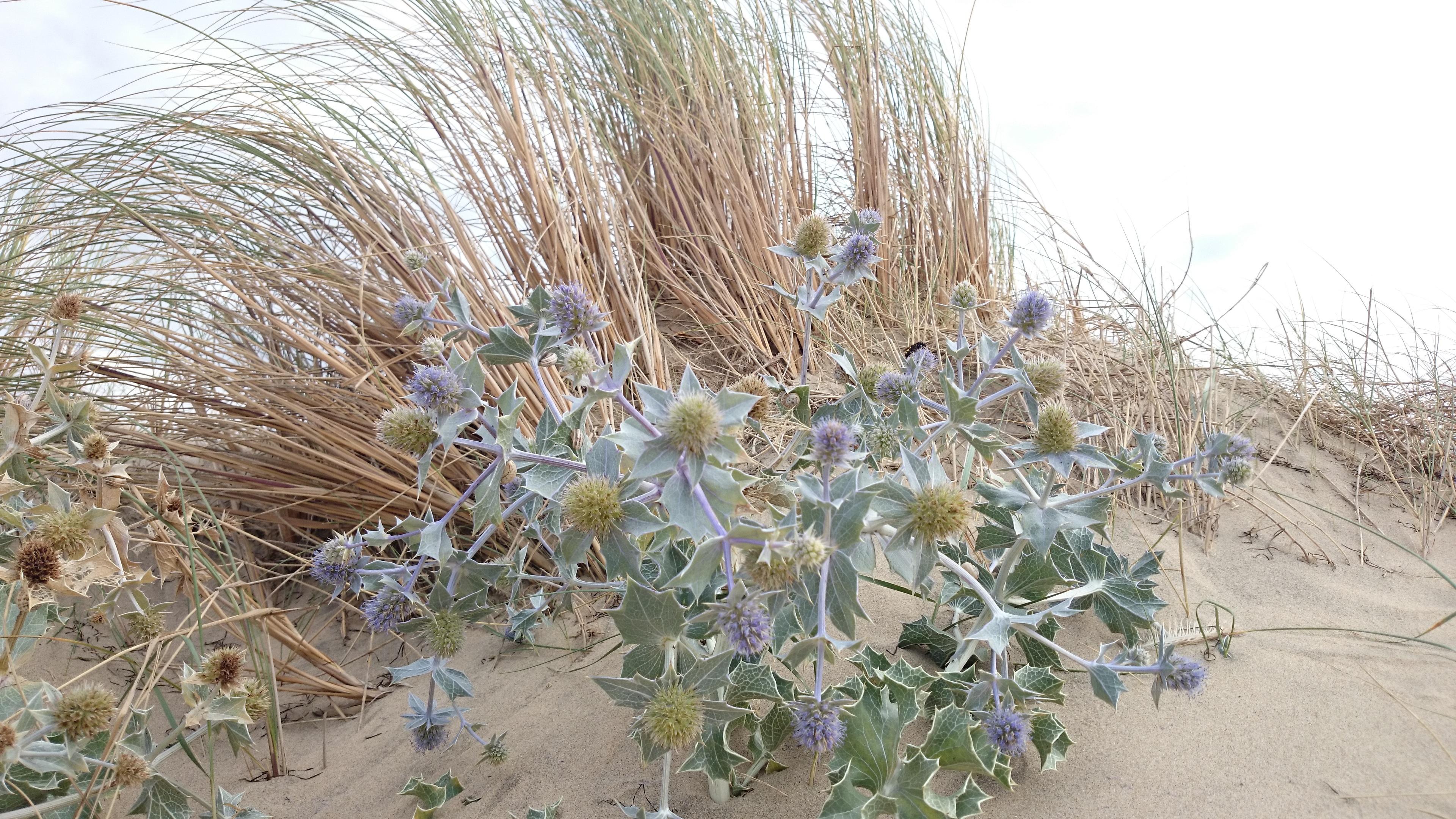 Images gratuites plage arbre la nature le sable - Plantes bord de mer atlantique ...