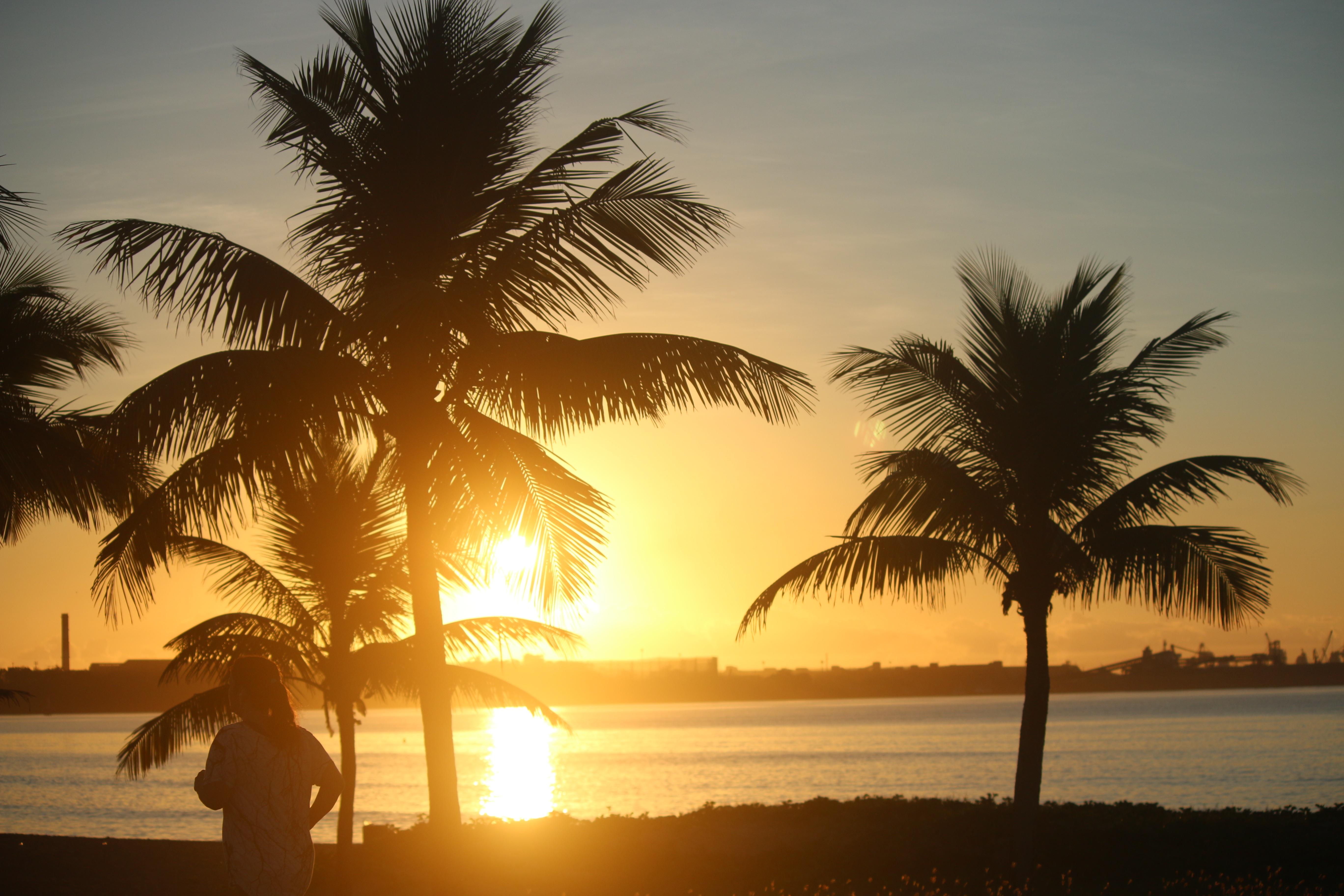 выставила фотографии картинки доброе утро пальмы отверг намеки то