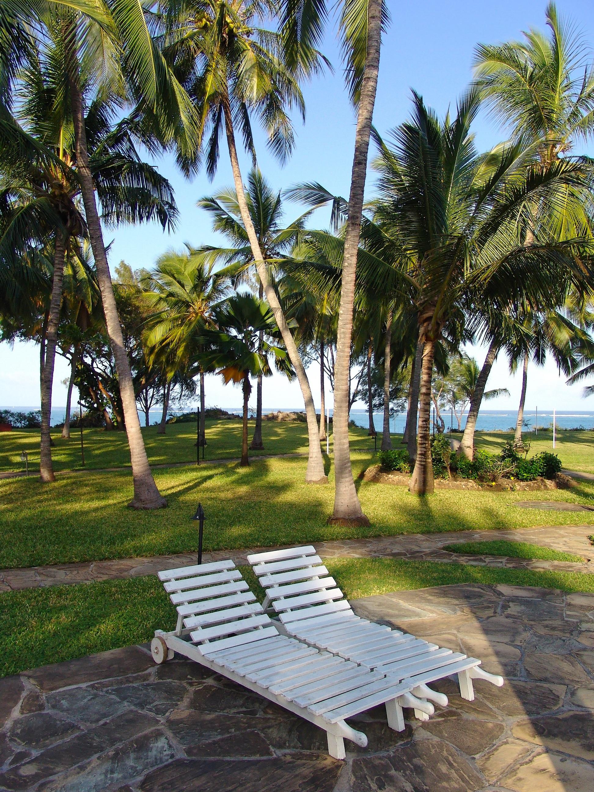 Wonderful Beach Sea Tree Water Nature Ocean Boardwalk Wave View Walkway Vacation  Travel Palm Africa Holiday Property