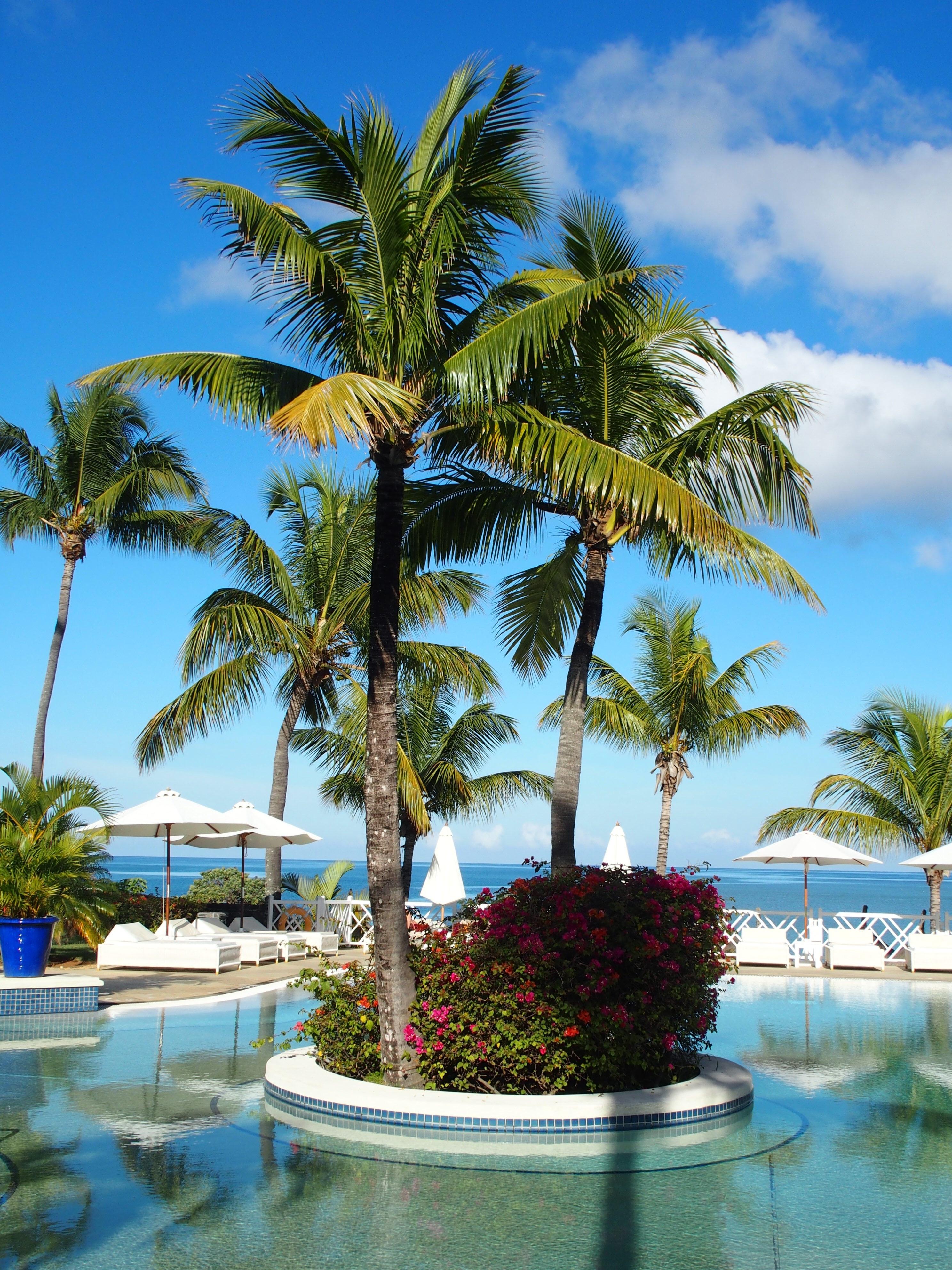 Free images beach sea tree water sun summer - Palm beach pool ...