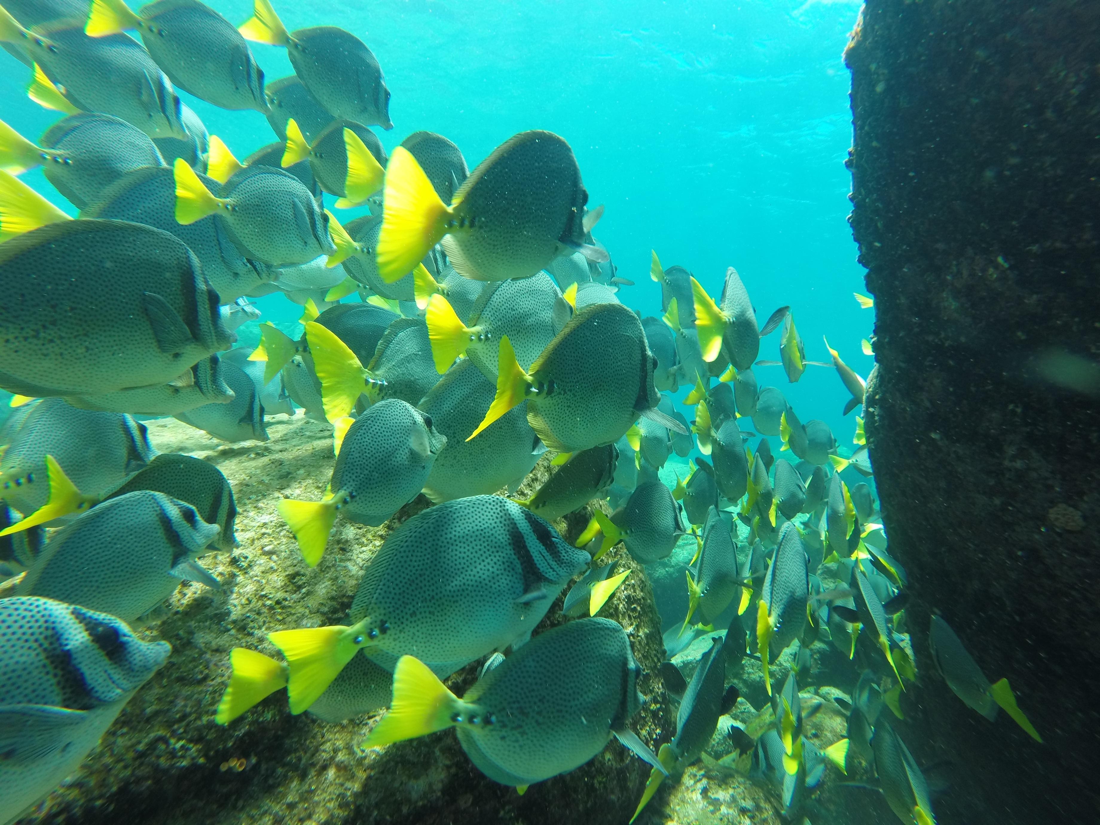 Free images beach sea water nature ocean diving for Green water in fish tank