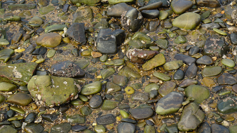 Gratis afbeeldingen strand zee water natuur rots blad