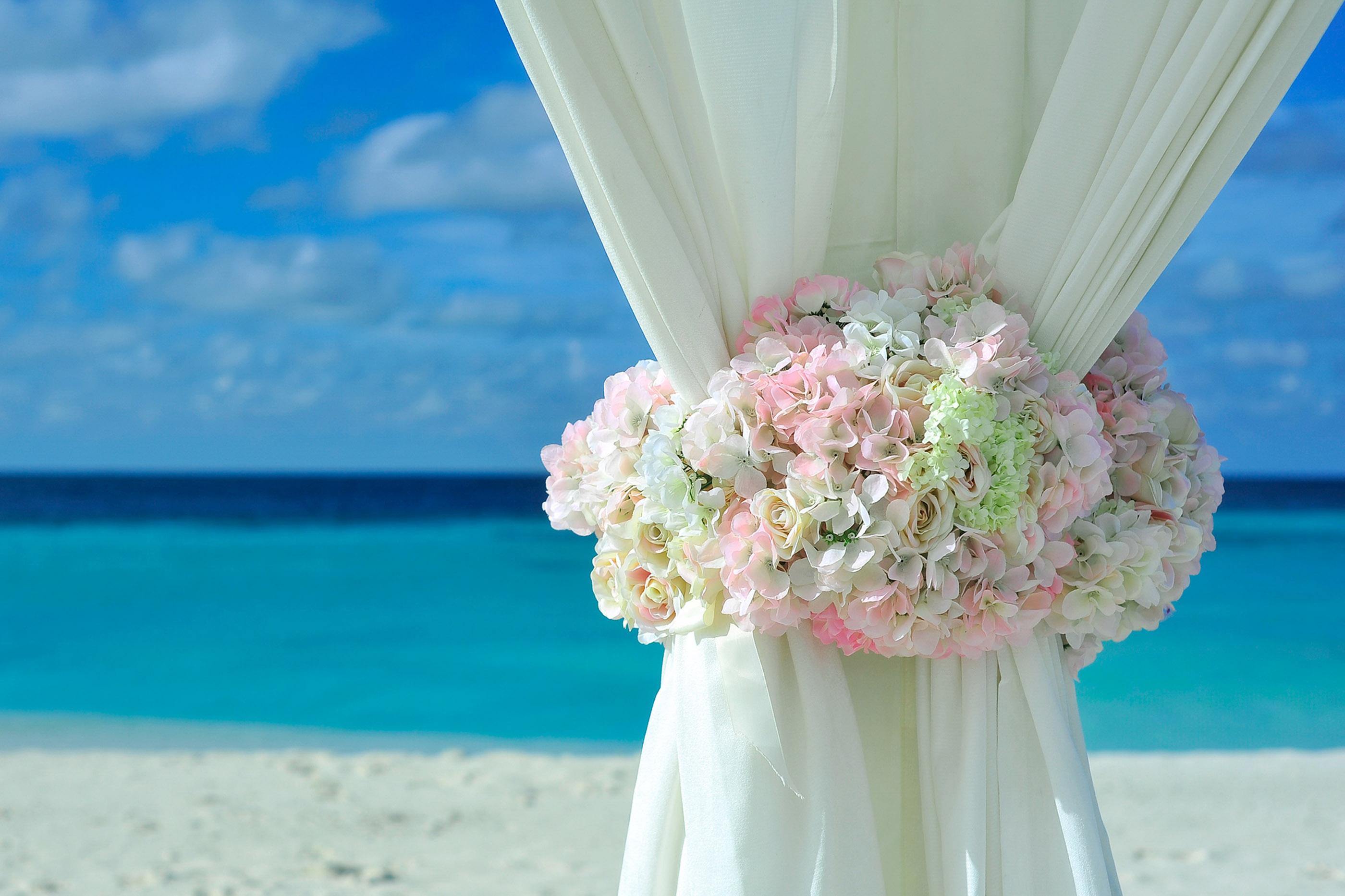 Free Images : beach, sea, water, sand, ocean, plant, woman, petal ...