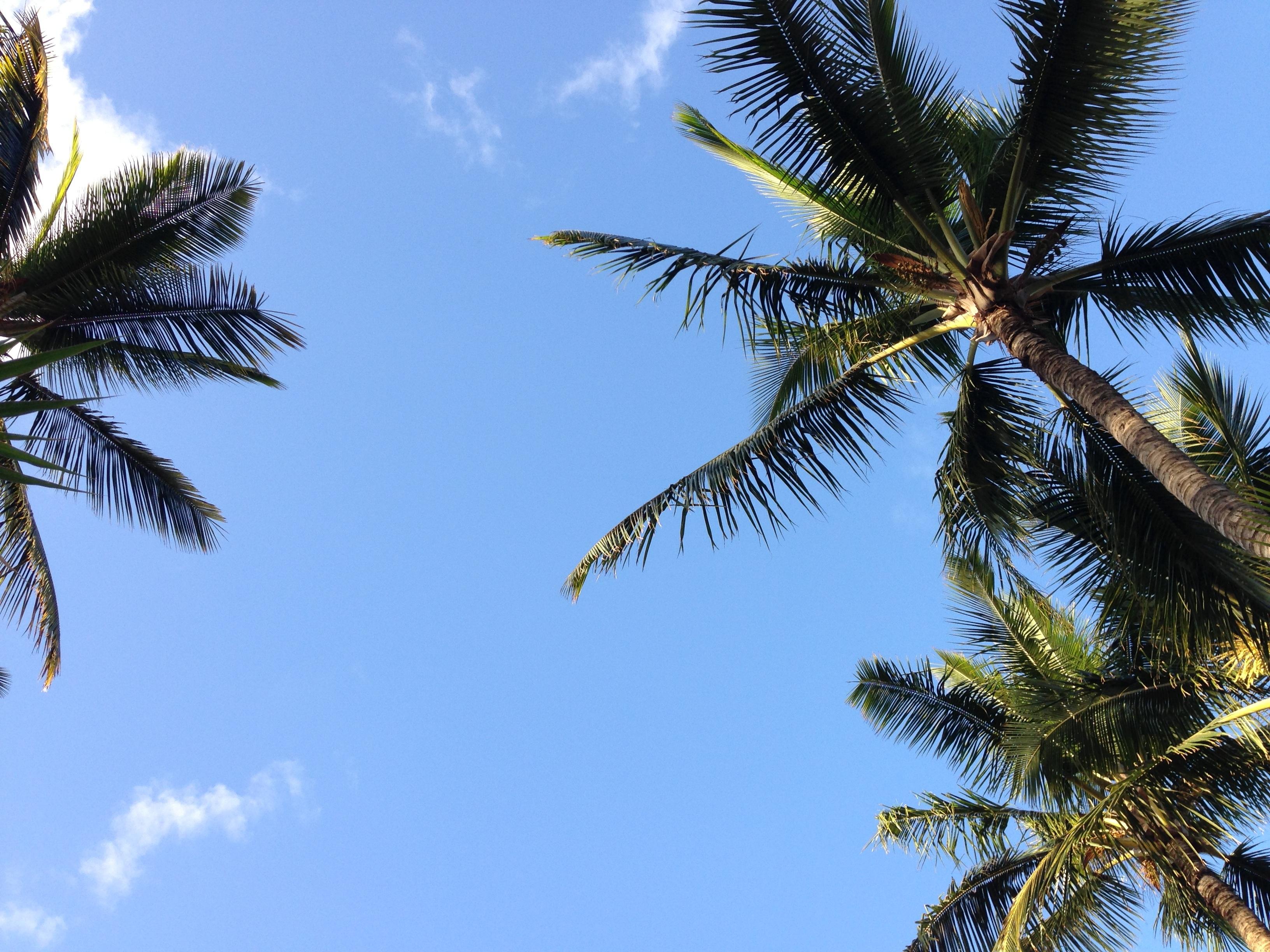 Free Images : beach, tree, branch, sky, leaf, flower, wind