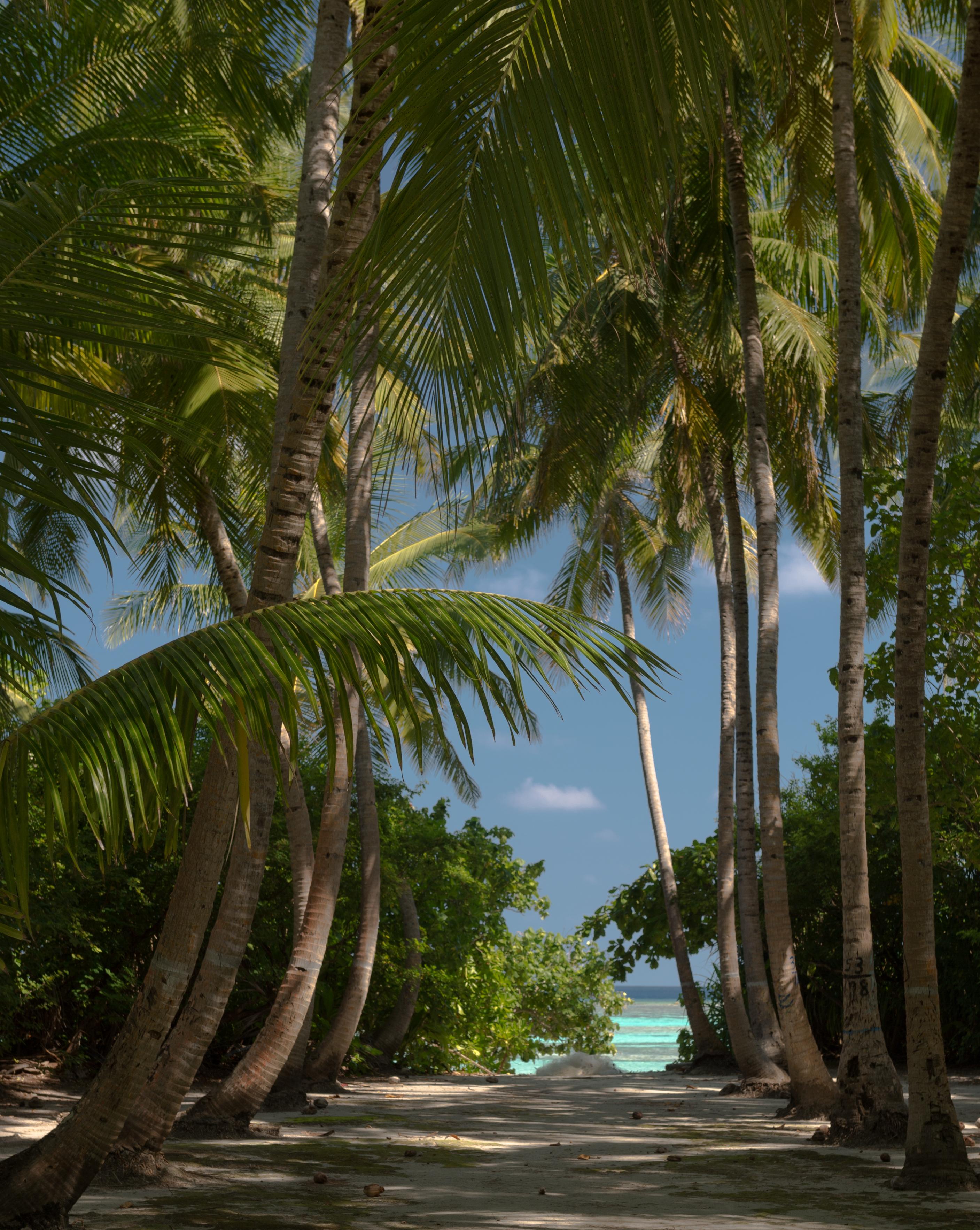 динамичный фото красивого леса с пальмами тайнах