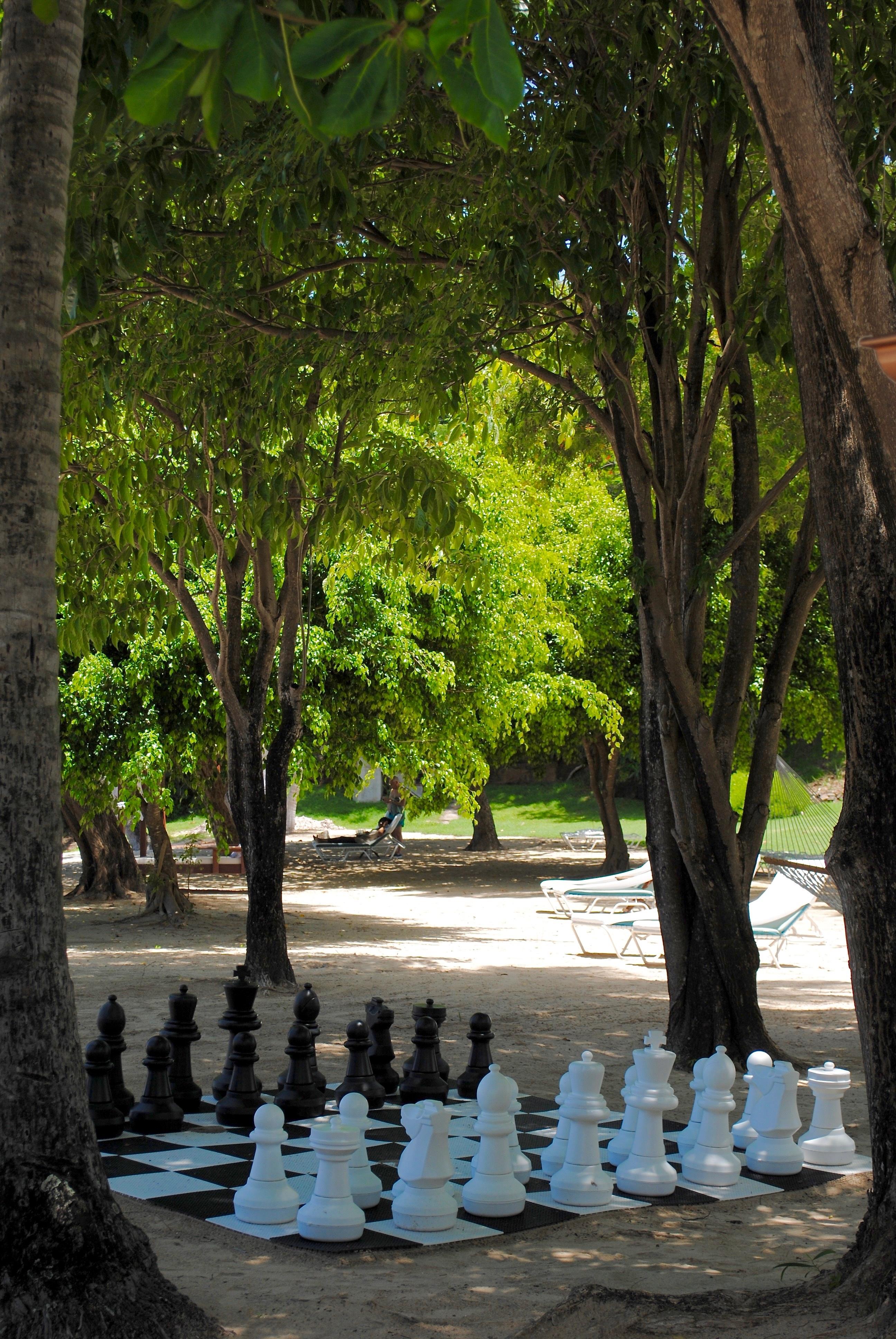 Fotos gratis playa rbol juego jugar hoja flor for Ajedrez gigante jardin