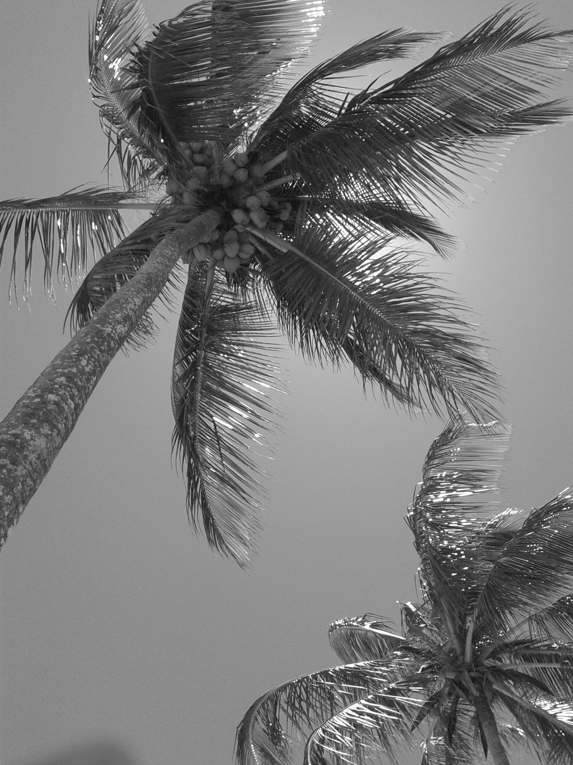 Gambar Pantai Alam Cabang Sayap Hitam Dan Putih Daun Embun