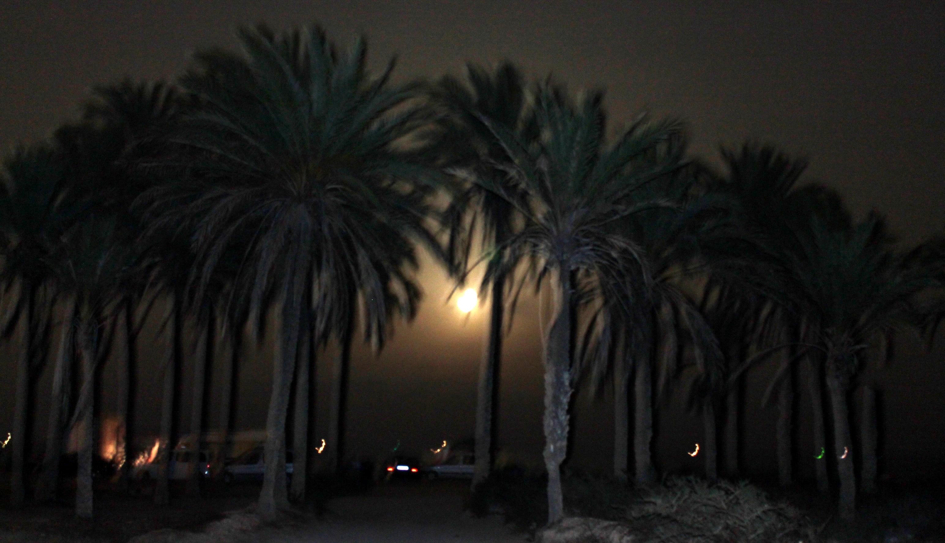 Gratis Afbeeldingen : strand, boom, silhouet, licht, vervagen ...