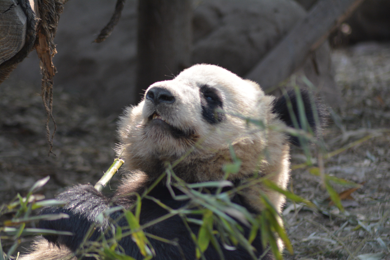 Fotos gratis : oso, fauna silvestre, Zoo, mamífero, vertebrado ...