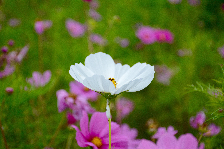 Fotos Gratis Hermosa Hermosas Flores Florecer Floreciente