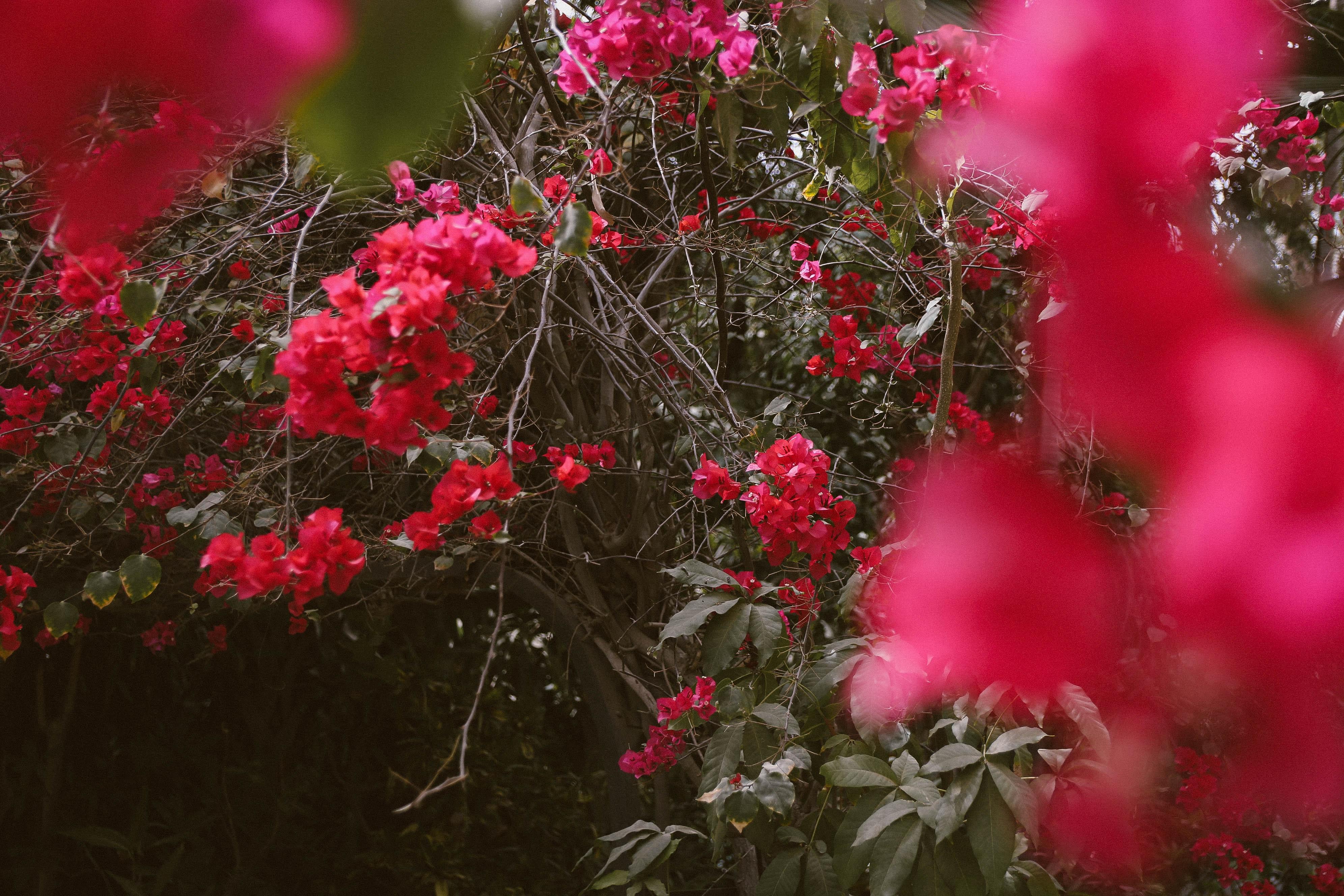 Fotoğraf Güzel çiçekler çiçek Açmak çiçeklenme çiçek