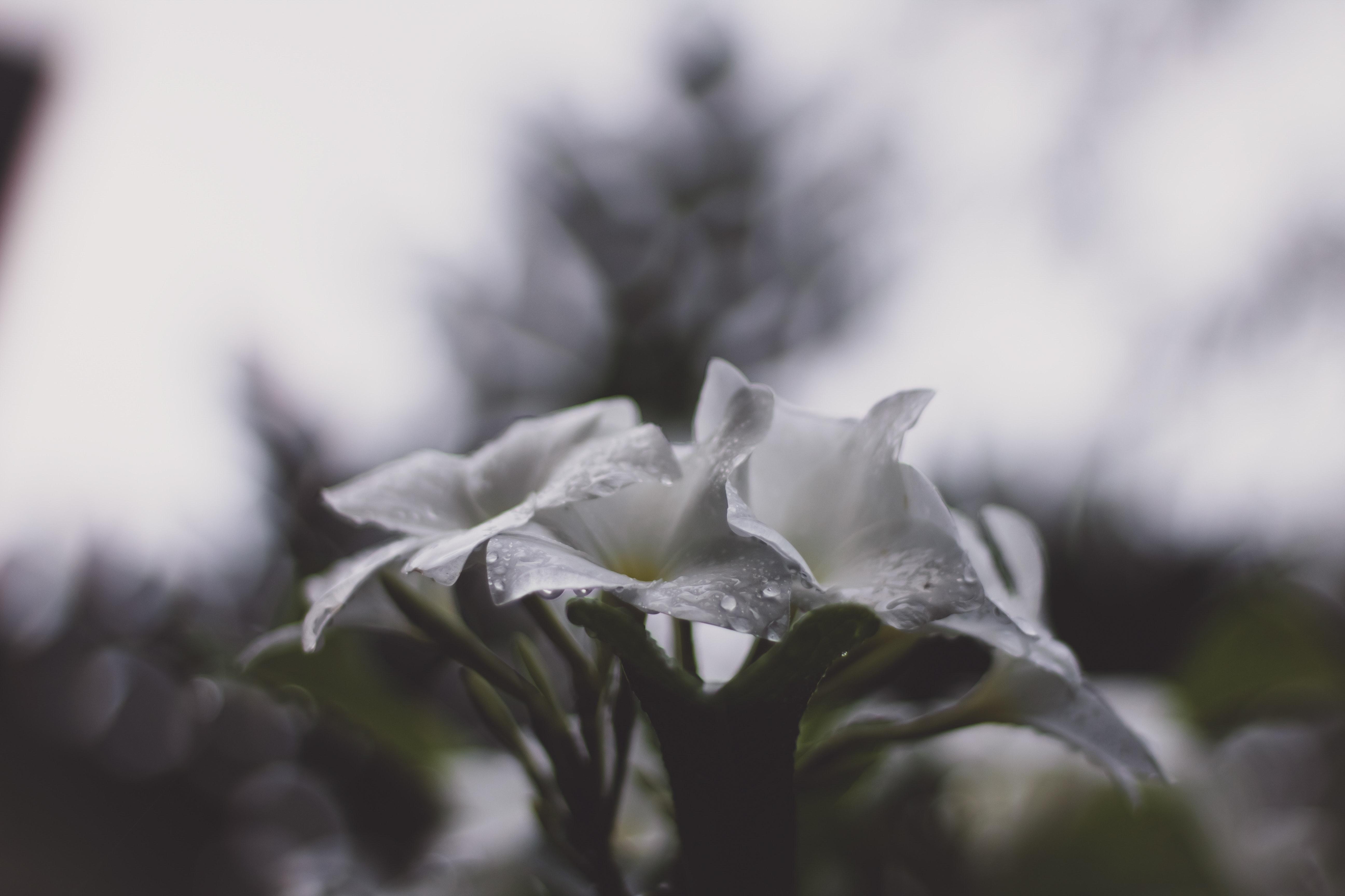 Gambar Bunga Bunga Indah Berkembang Berbunga Mekar Terang