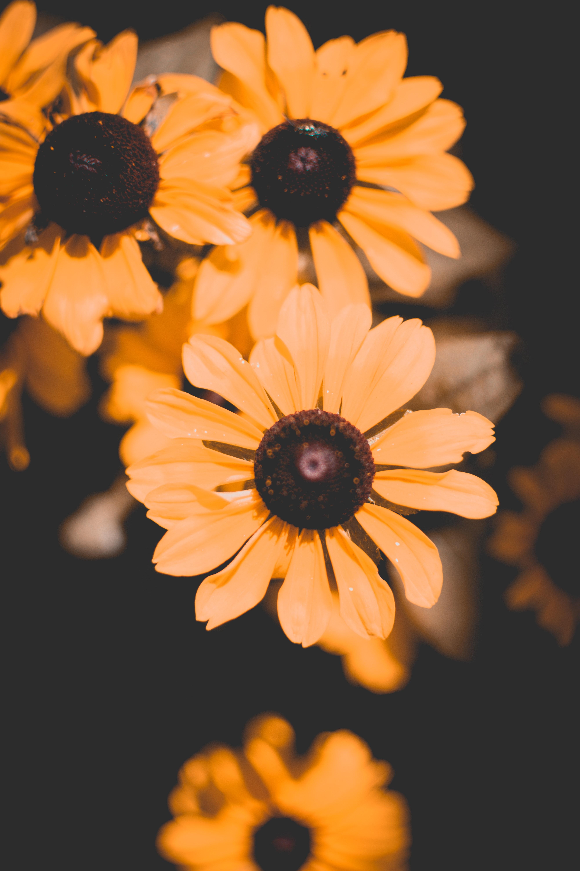 Hình ảnh Những Bông Hoa đẹp Nở Sáng đóng Lên Trang Trí