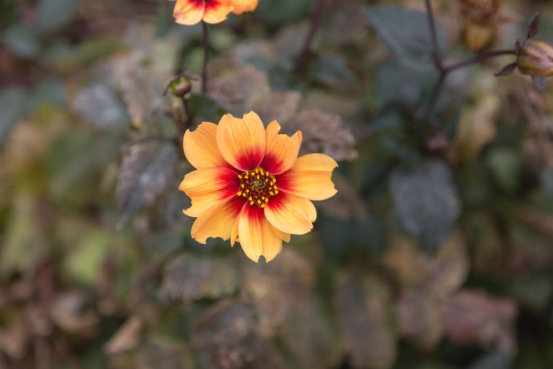 Fotos Gratis Hermosas Flores Florecer Floreciente Flor