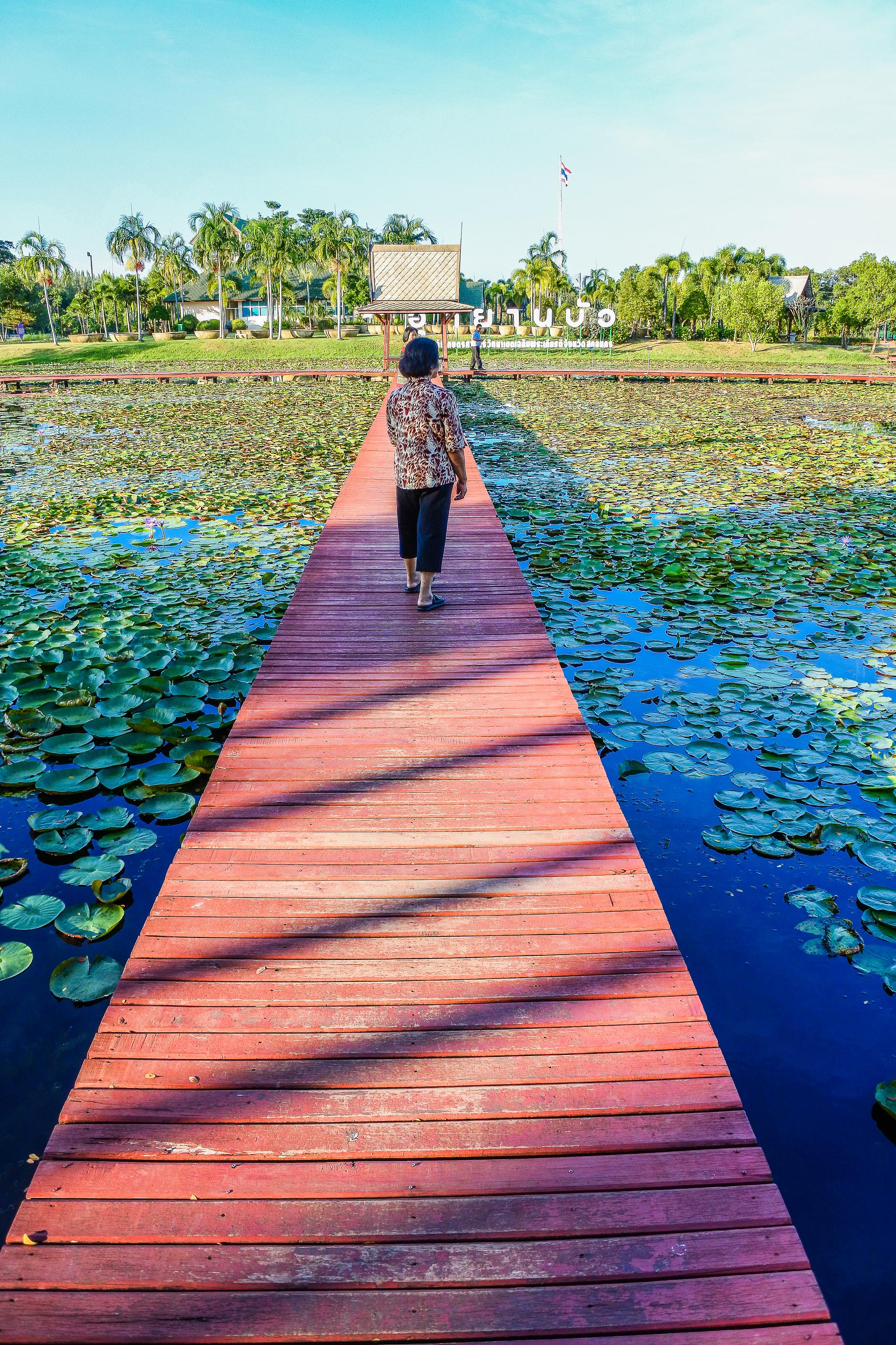 Free Images Beauty Hall Lotus Beautiful Nakhon