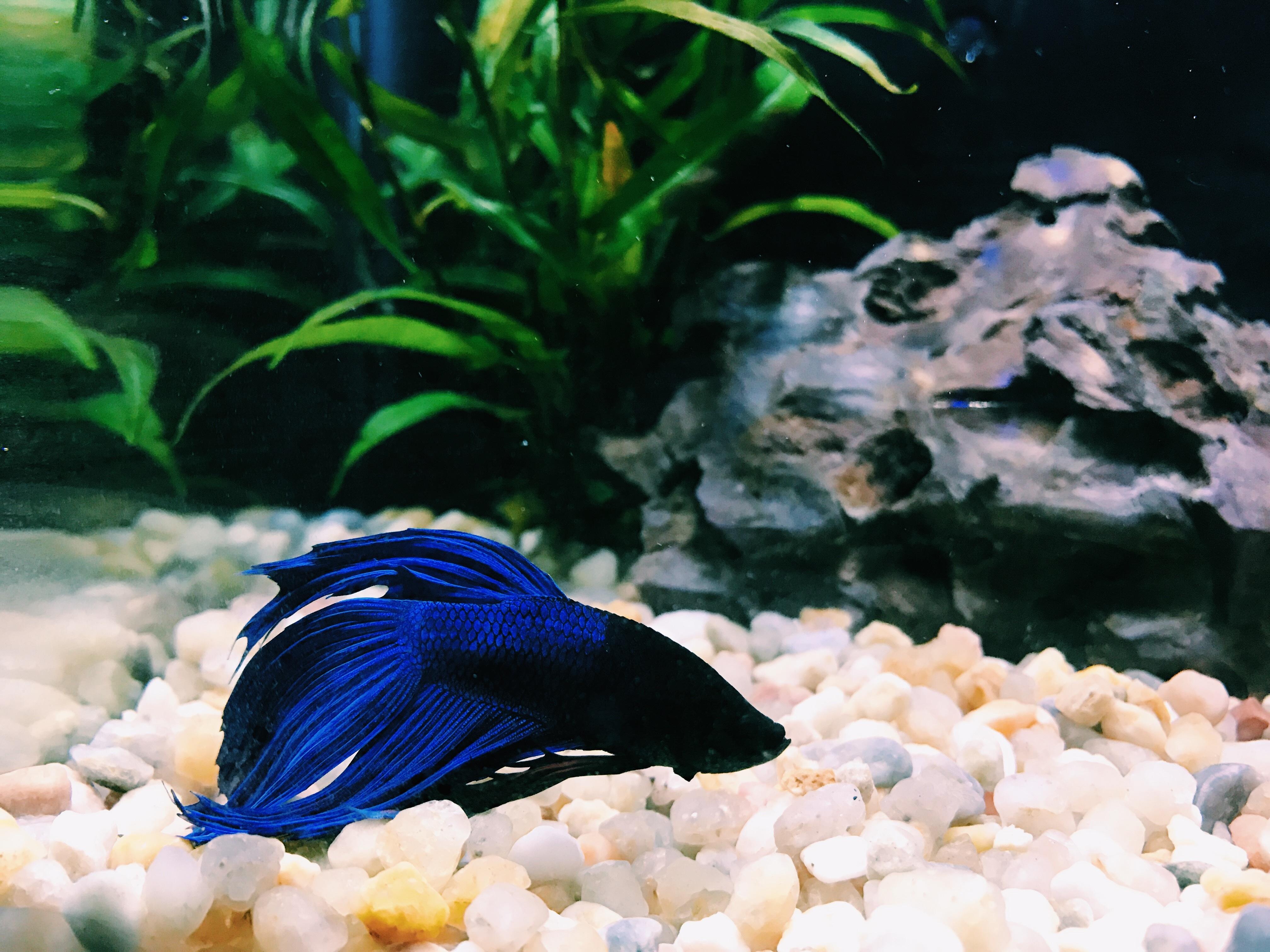 Про аквариумных рыбок с картинками