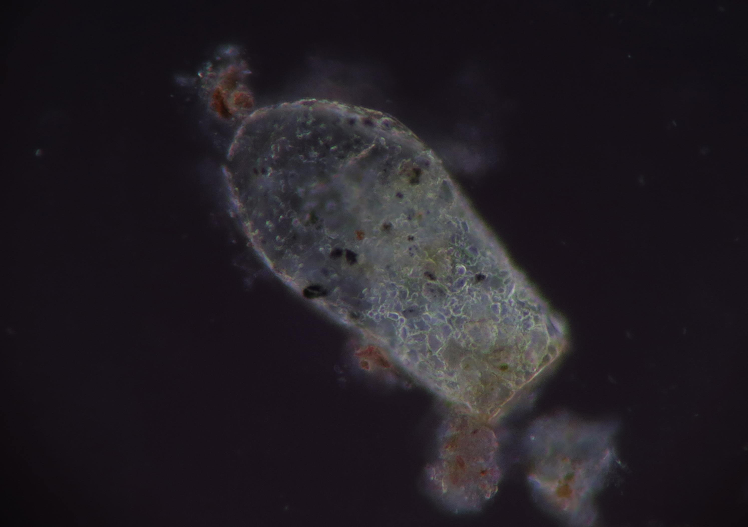 Ingyenes képek : biológia hold világűr csillagászat protiszták