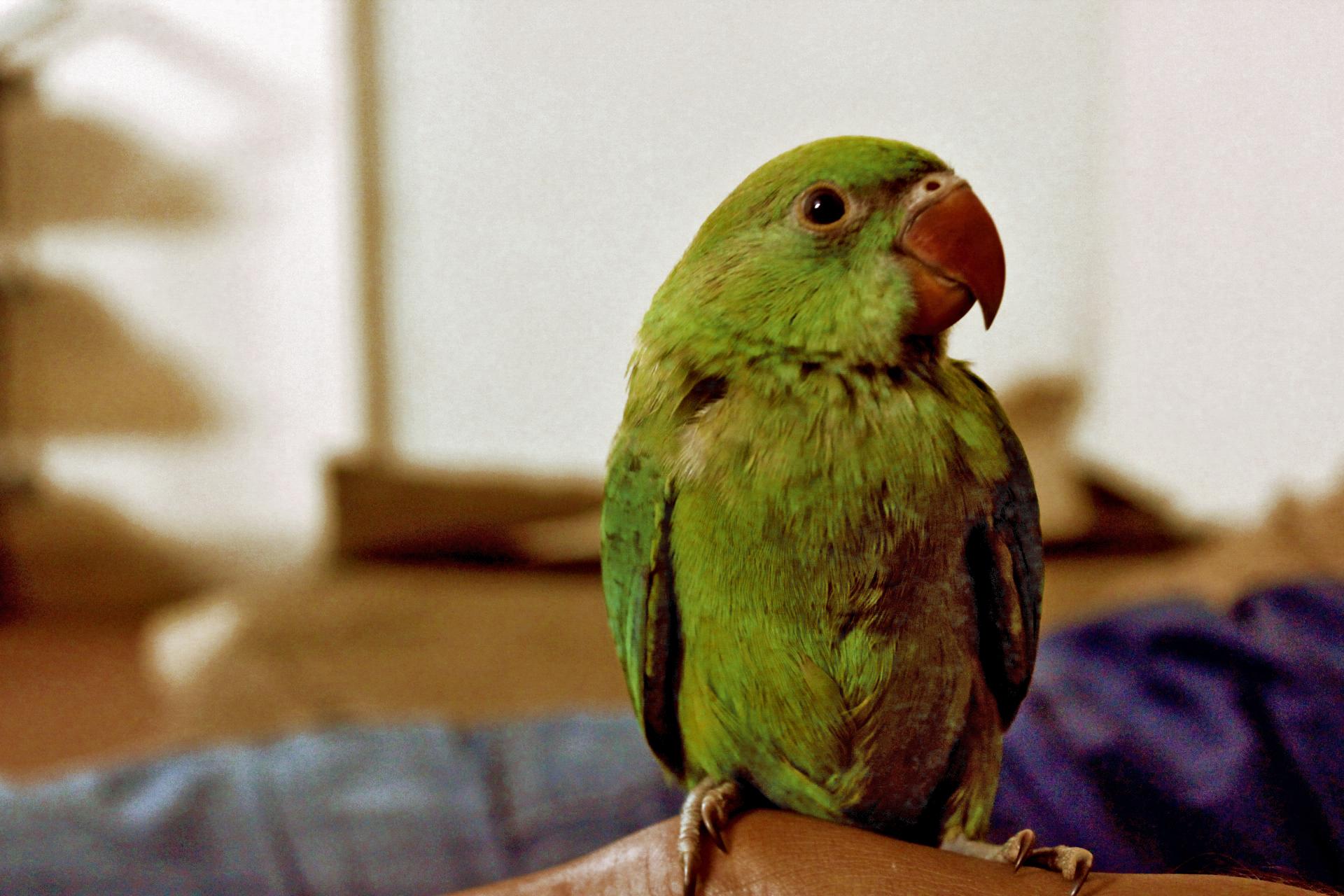 Μεγάλο μεξικάνικο πουλί φωτογραφίες