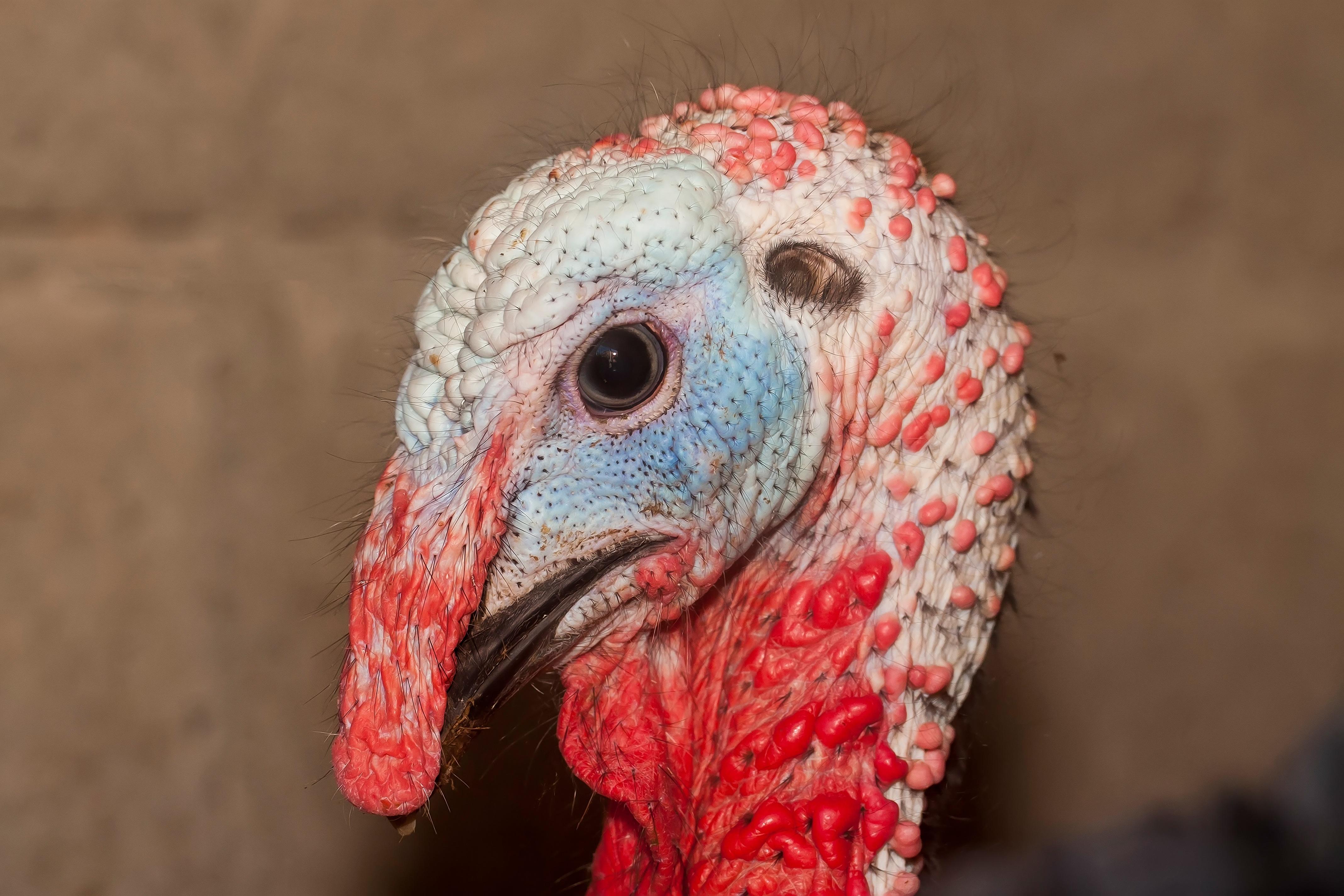Kostenlose foto : Vogel, Tier, rot, Schnabel, Farbe, blau, bunt ...