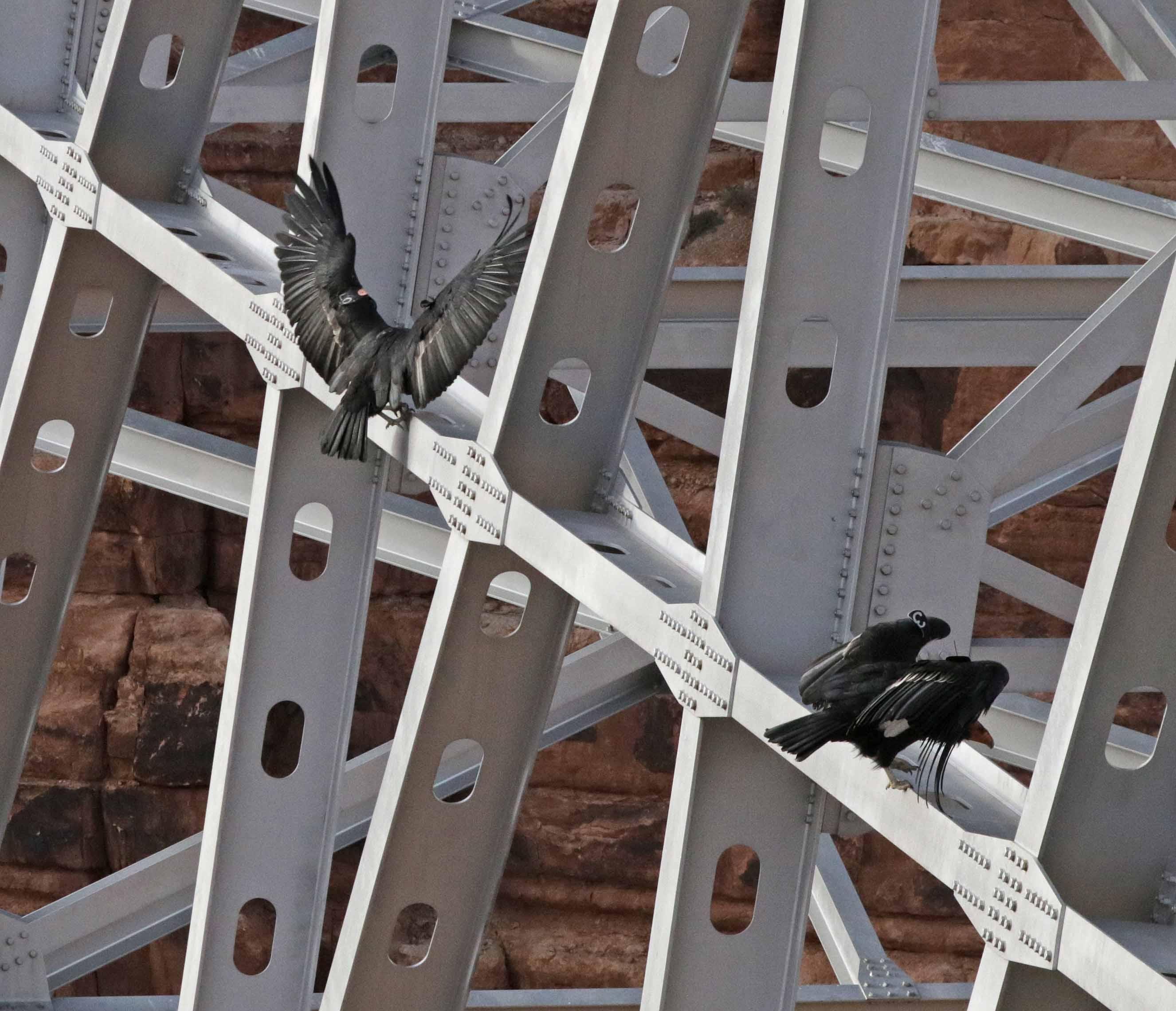 Stehlen Modern kostenlose foto vogel die architektur struktur holz brücke