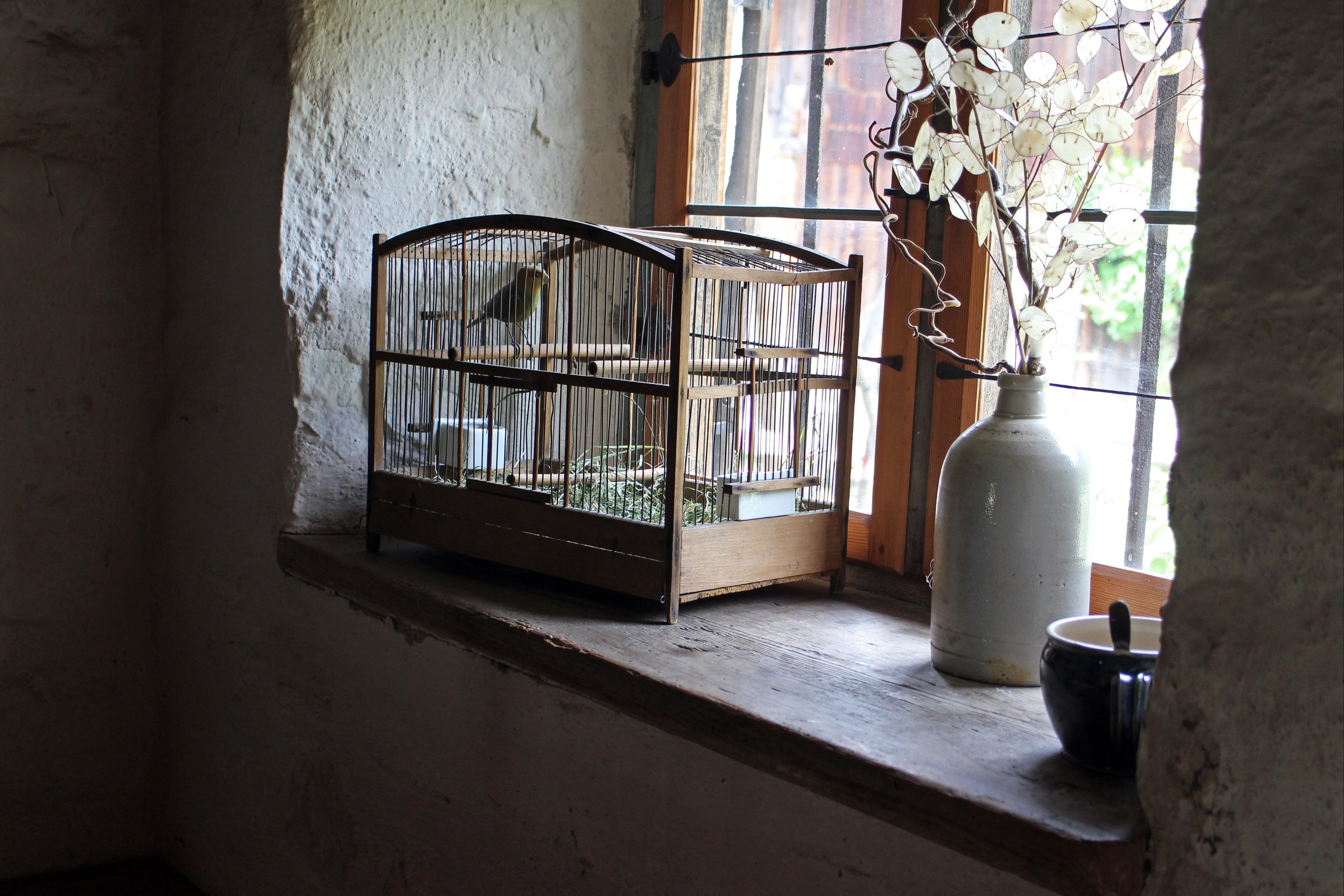 bird architecture wood house window home nostalgia