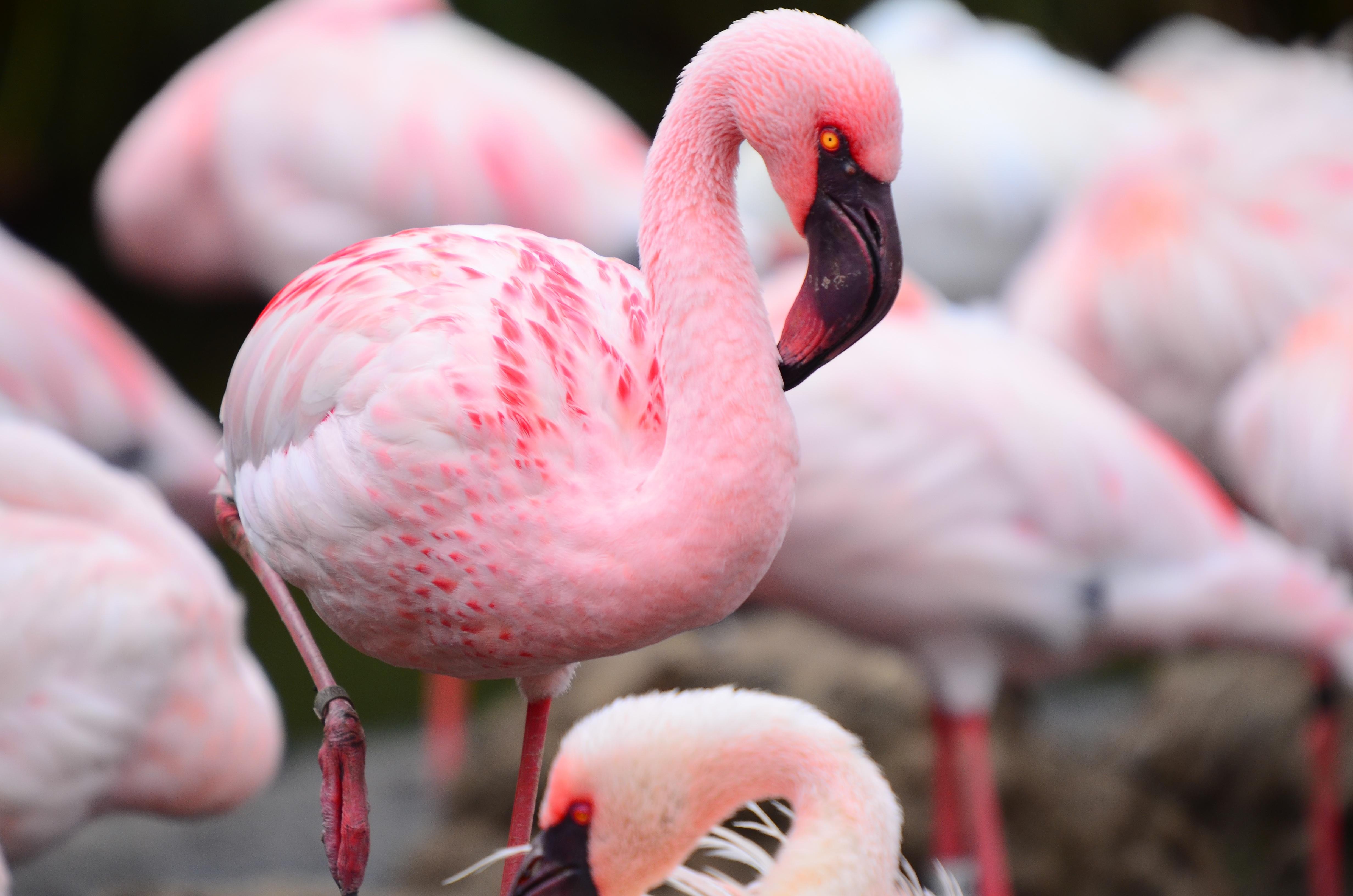 картинки про фламинго наделена автономным