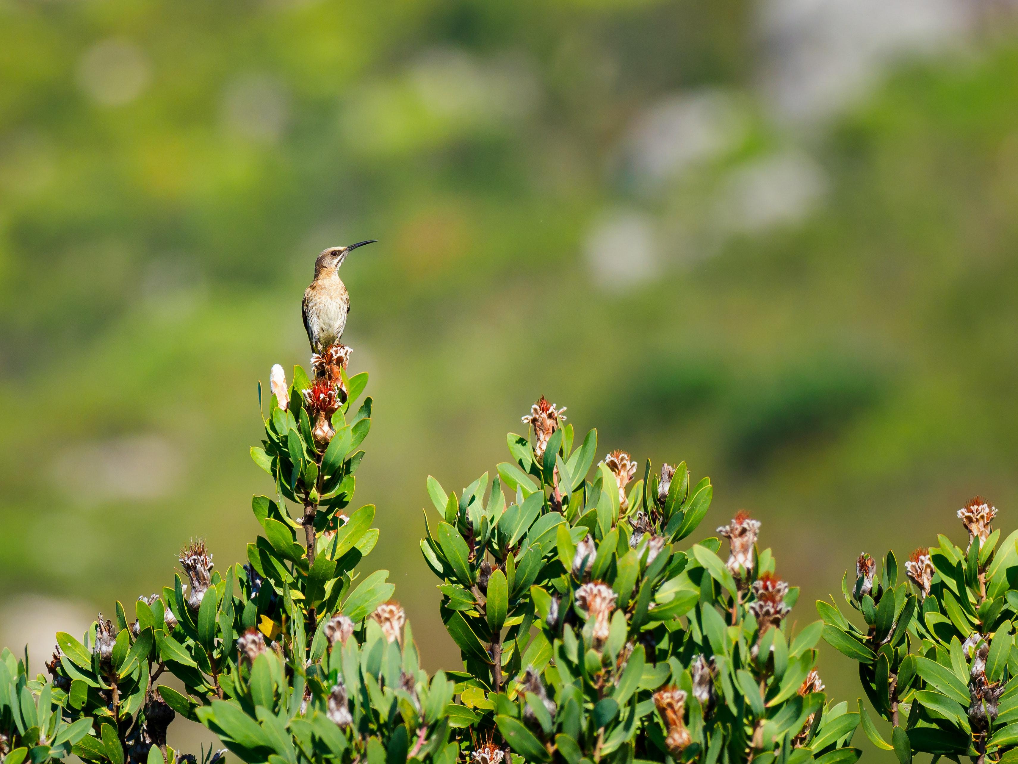 Gambar Paruh Menanam Bunga Margasatwa Tanaman Berbunga Bertengger Burung Burung Gereja Coraciiformes Smartweed Keluarga Soba 3422x2567 1558261 Galeri Foto Pxhere