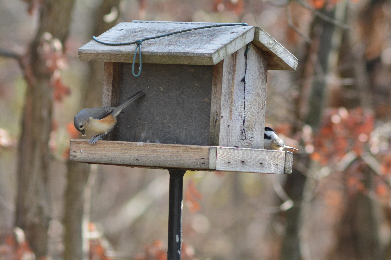 Картинки кормушки для птиц