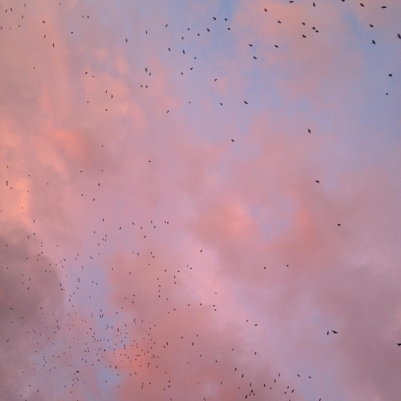 Free Images : cloud, sky, sunset, texture, line, romantic ... Iphone 5c