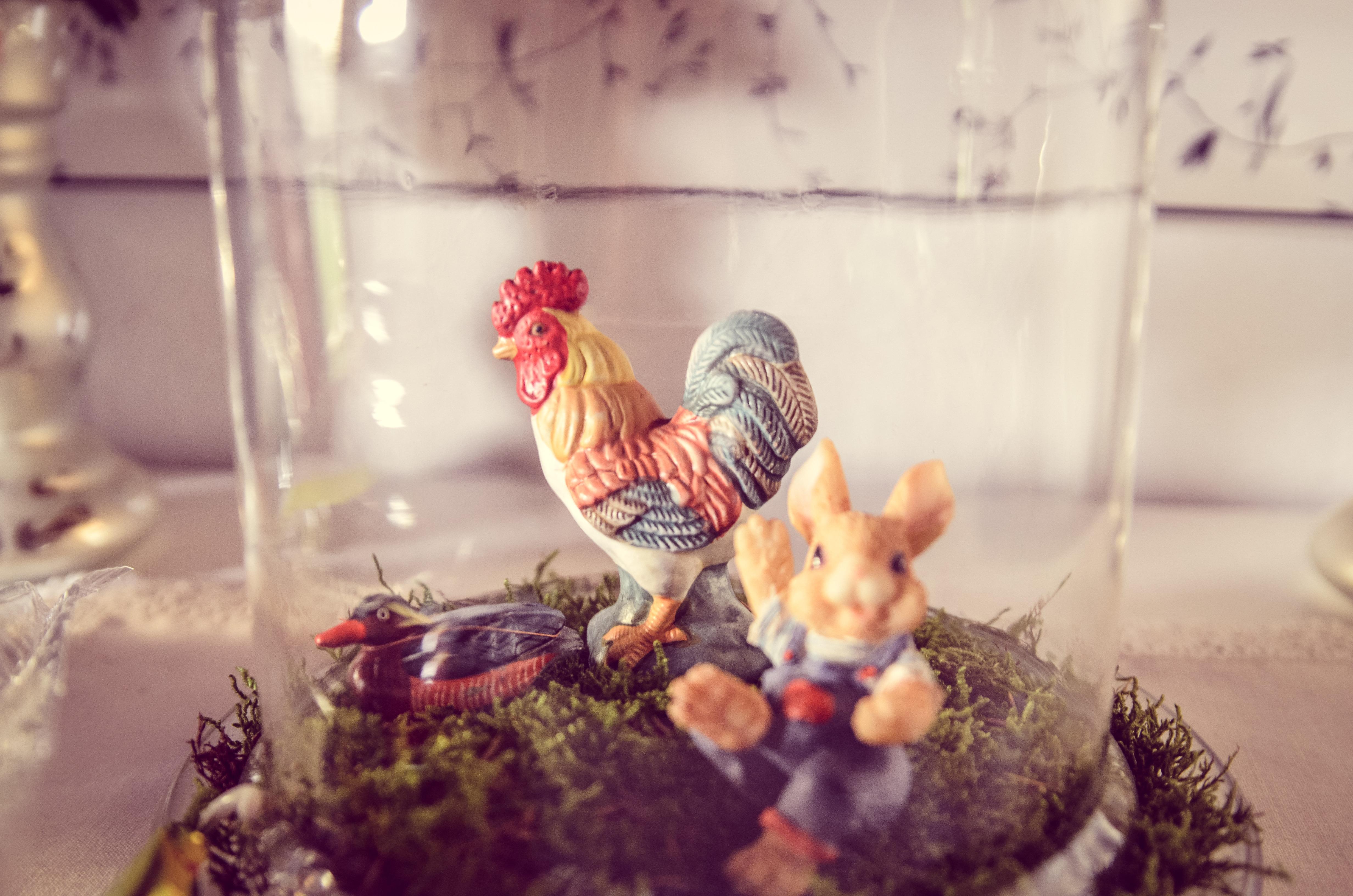 Fotos gratis : pájaro, granja, animal, decoración, comida, color ...