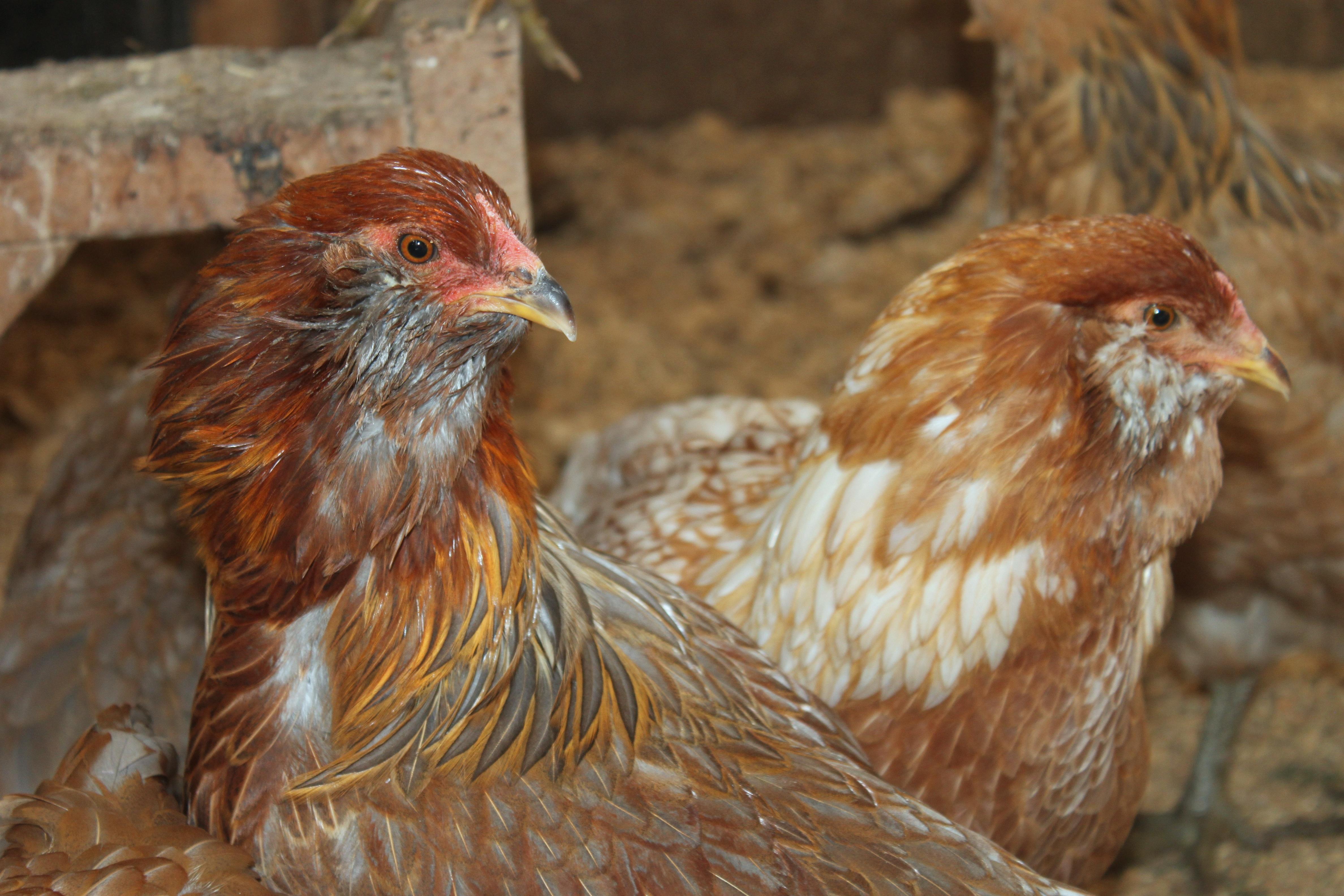 poulettes de lien de sexe noir porno gratuit avec trio