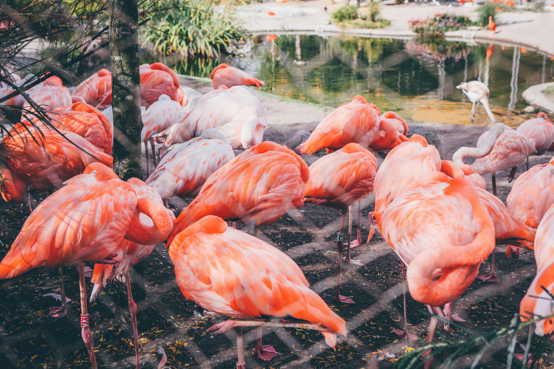 banco de imagens fauna flamingo pássaro aquático 5760x3840