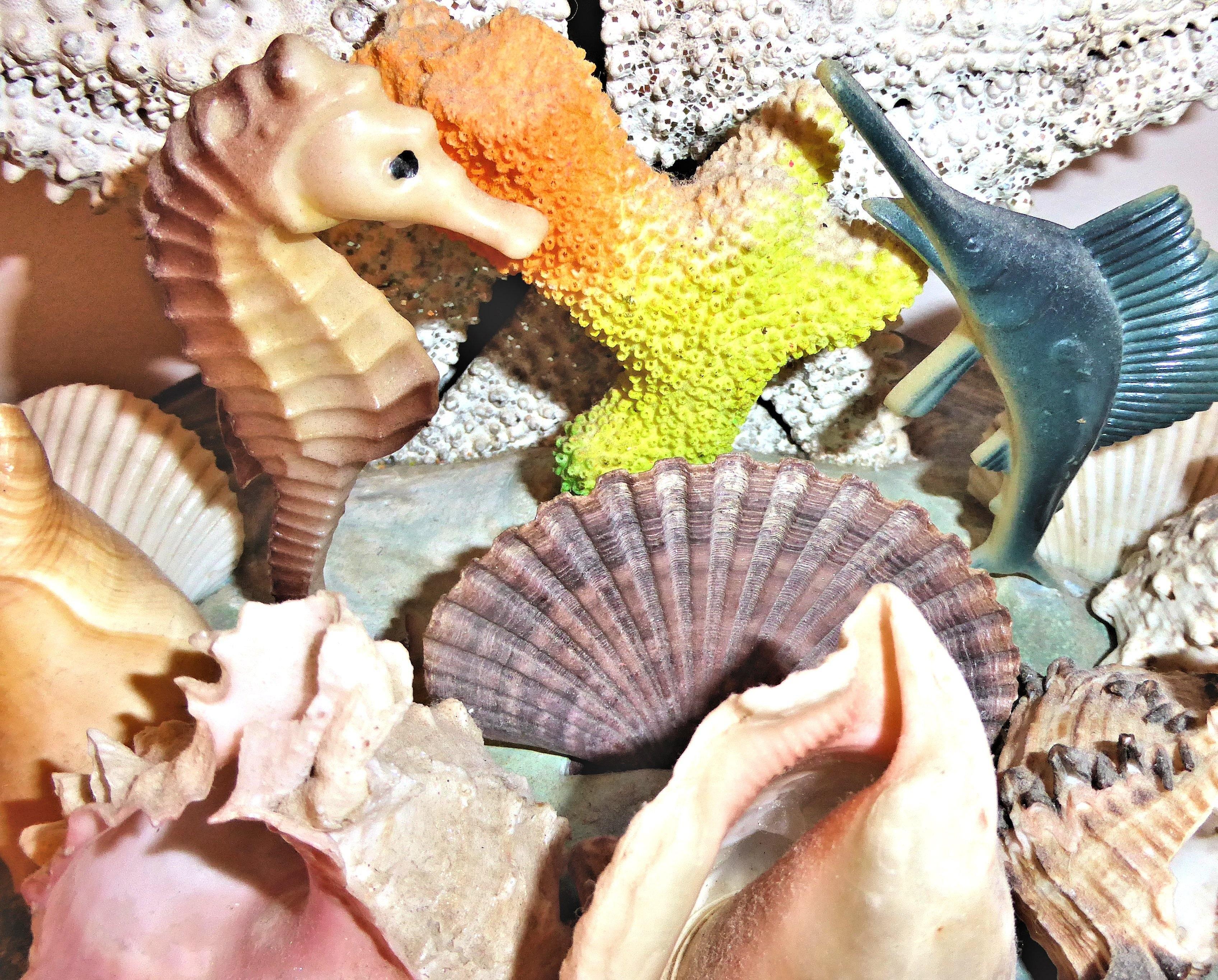 Gambar Burung Ikan Kerang Laut Ornamen Kerang Laut Otentik