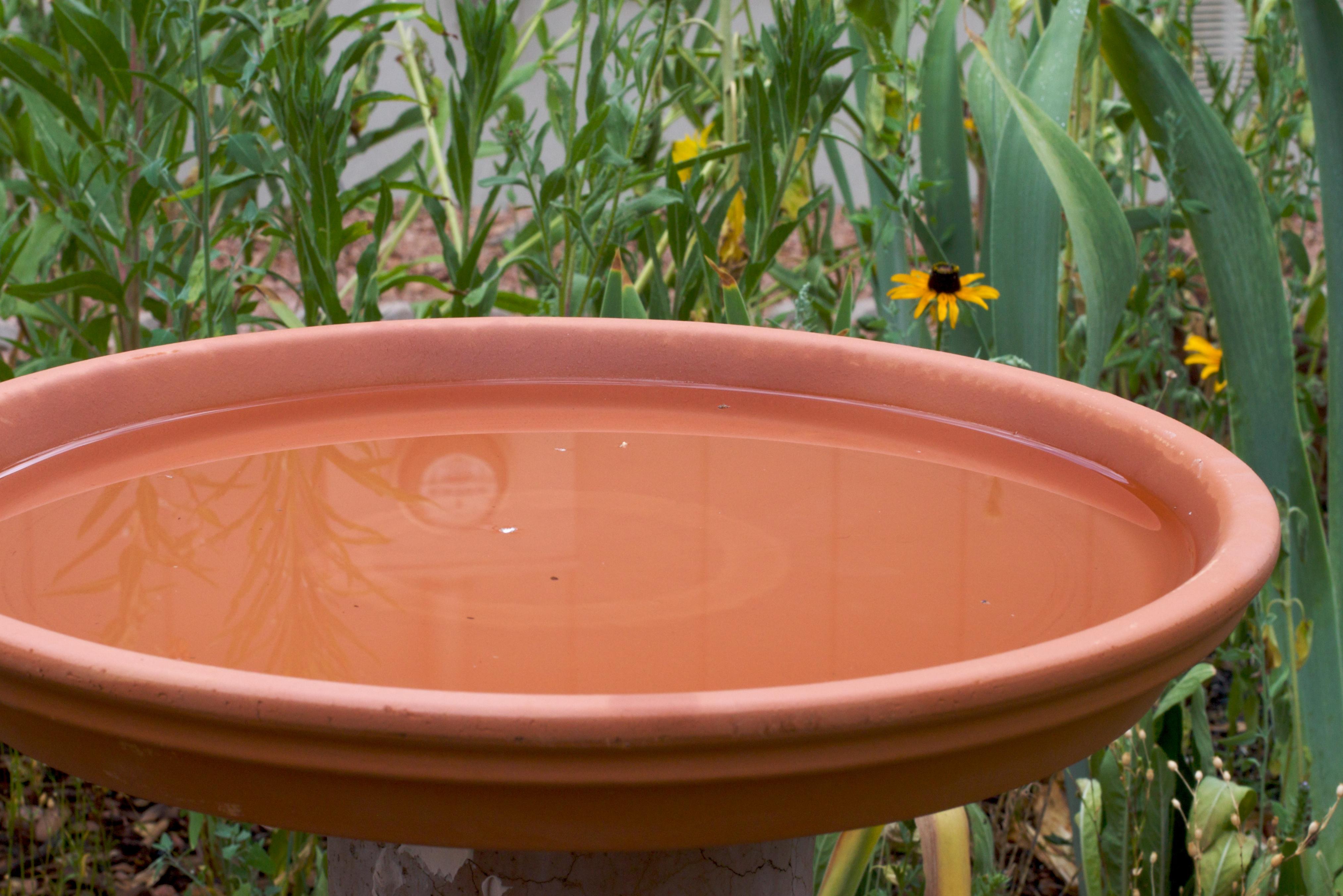 Free Images Flower Green Produce Backyard Garden