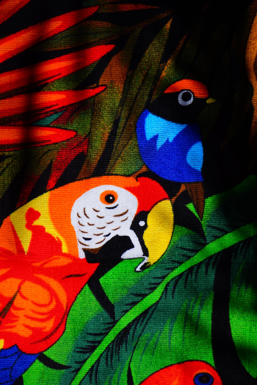 Papier Peint Avec Perroquet images gratuites : oiseau, fleur, rouge, couleur, coloré, la