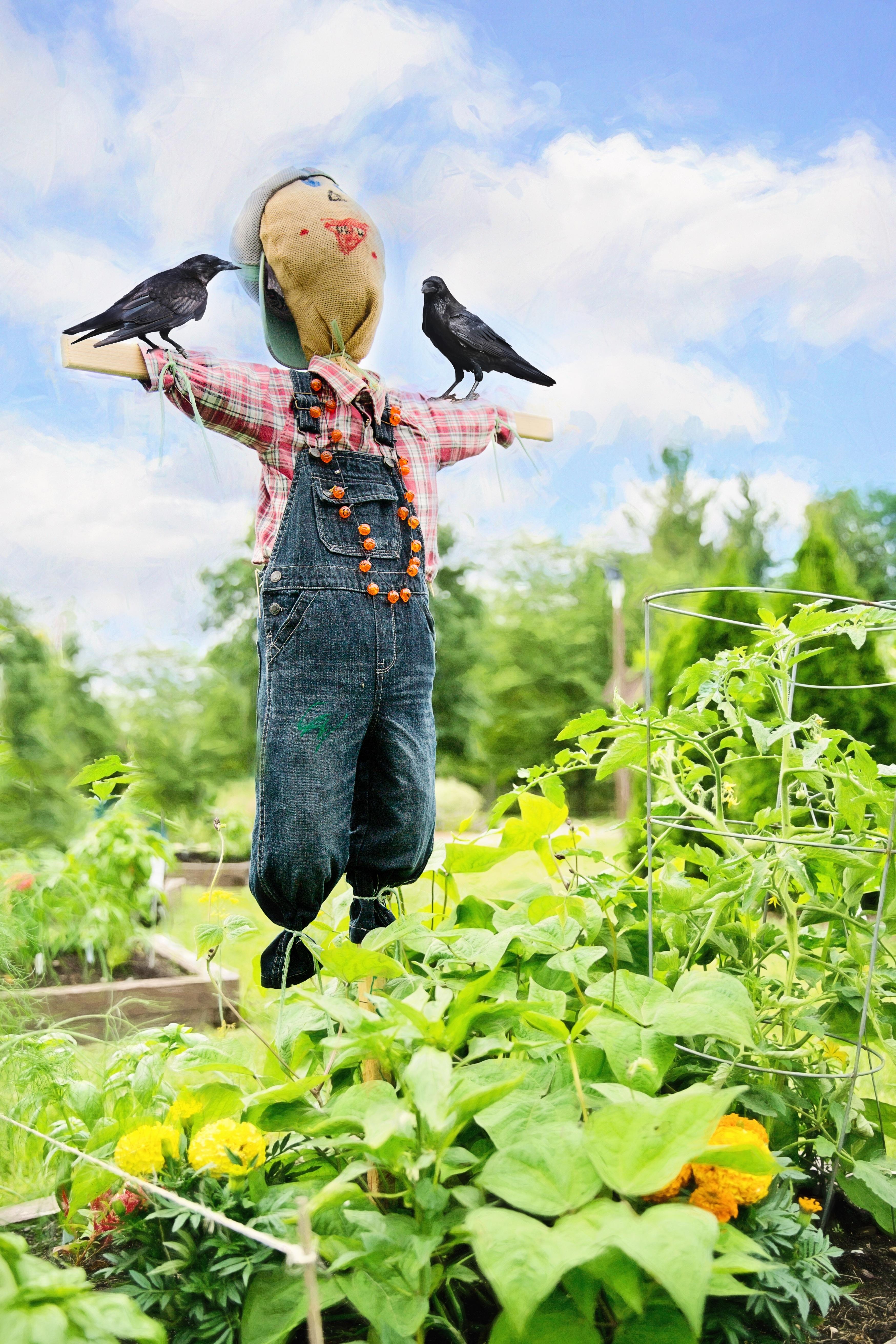 Gambar Bunga Musim Panas Dekorasi Pertanian Taman Berkebun Tanaman Lucu Menakut Nakuti Burung Gagak 3497x5246 564441 Galeri Foto Pxhere