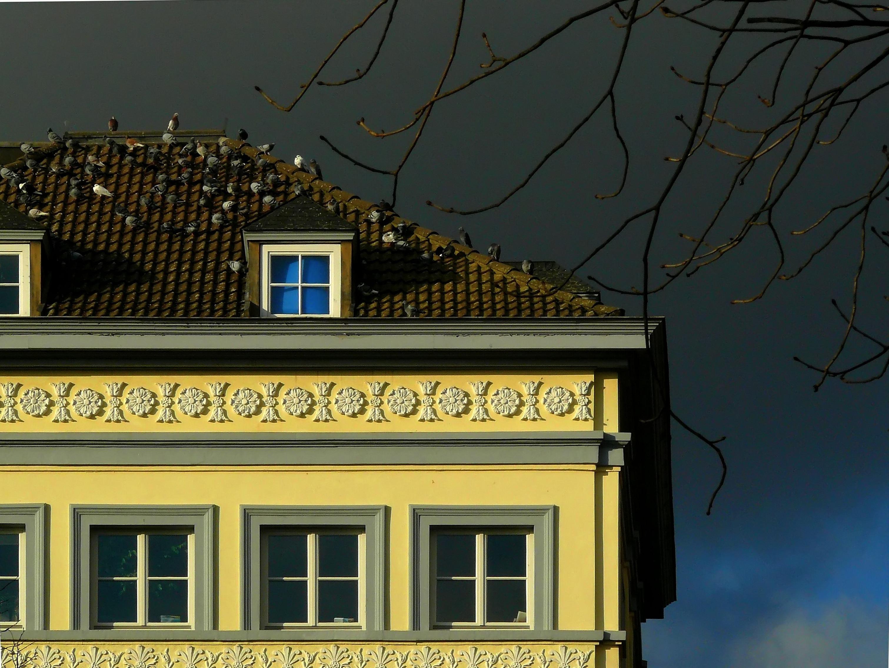 rood weer facade tegel steen verlichting ornament dakwerk vogelstand duiven wolken dieren duif onweersbui somber dakpannen pleisterwerk