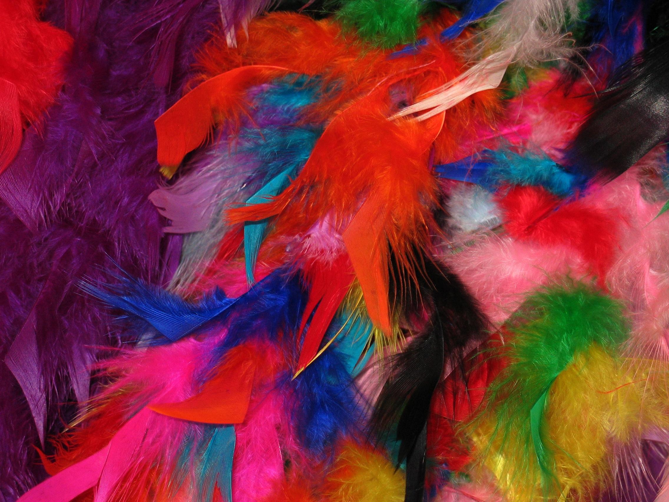 Kostenlose foto vogel liebe dekoration muster for Karneval dekoration
