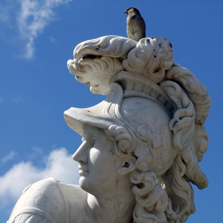 Banco de imagens : pássaro, monumento, estátua, gárgula